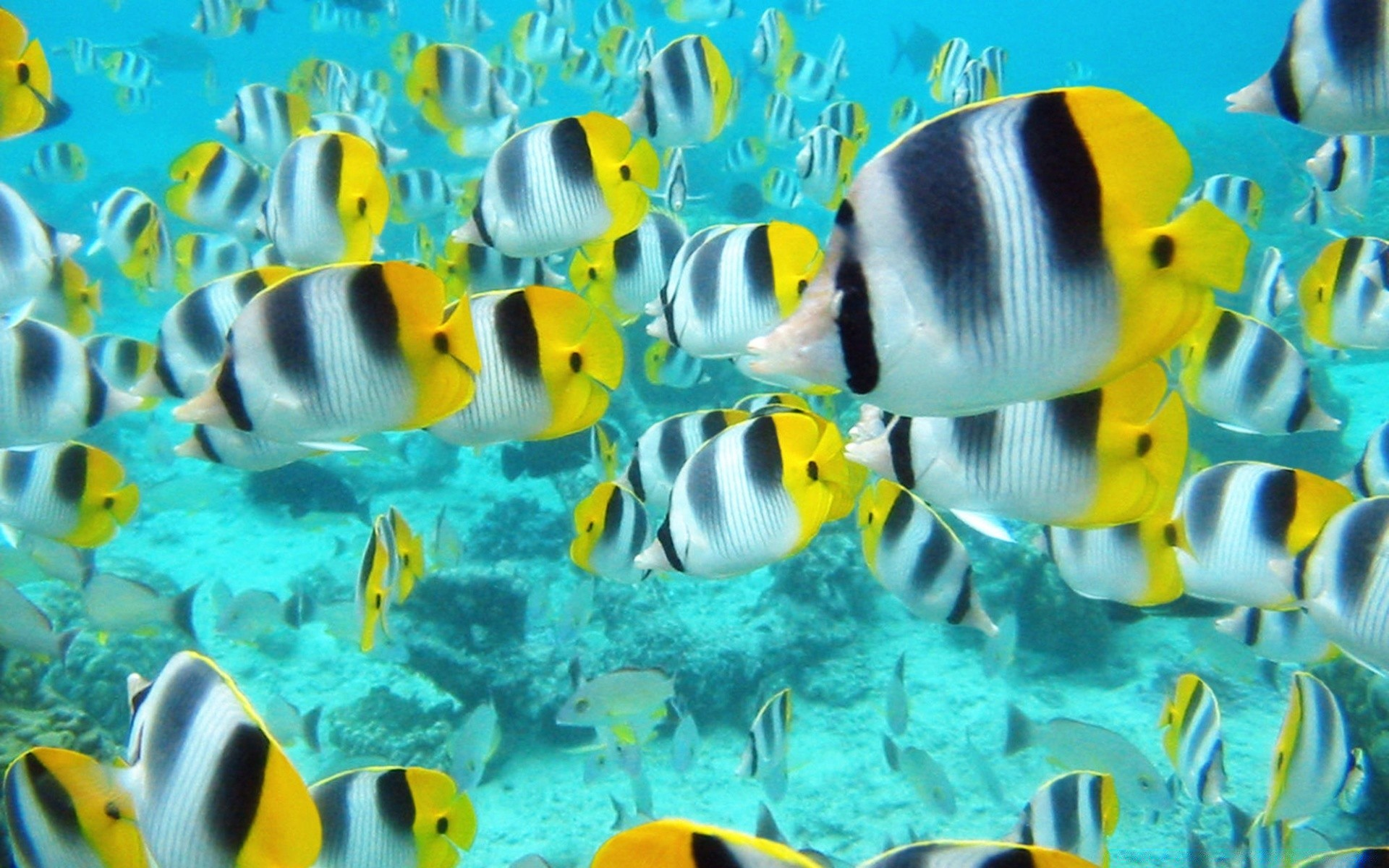 Colorful ocean fish