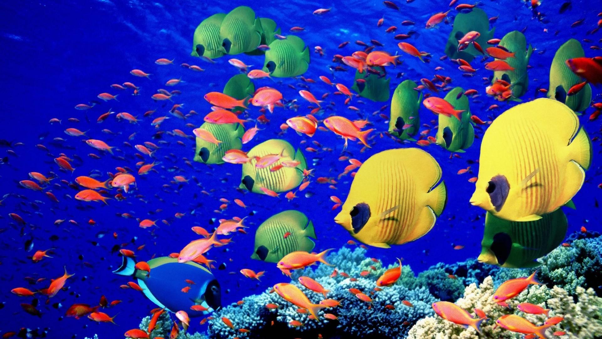 несколько раз картинки море с рыбами них должна присутствовать