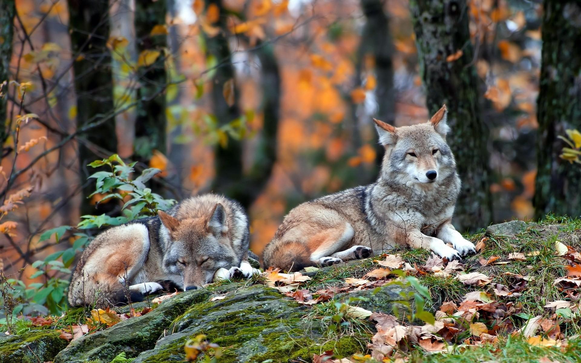 Картинки о животных и природе, время поздравления для