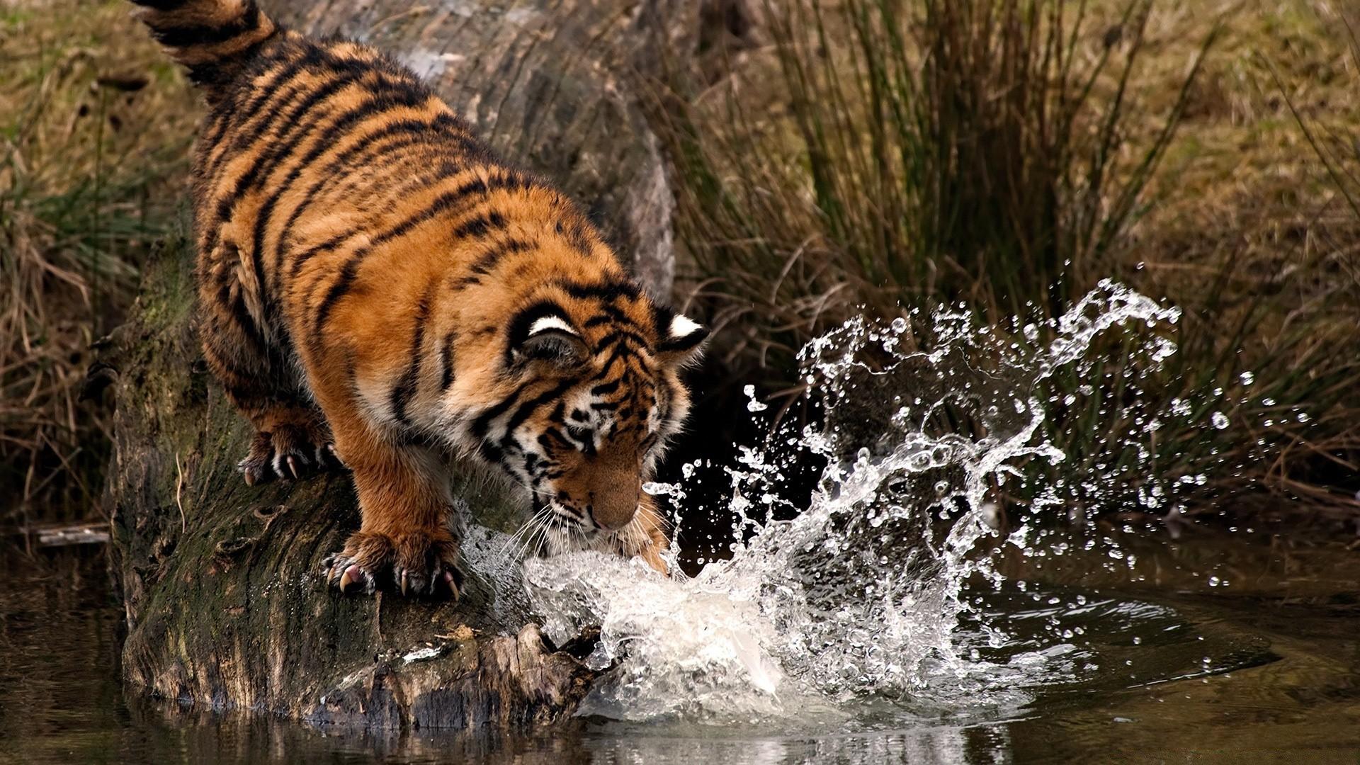 Espectaculares fotos de animales 64