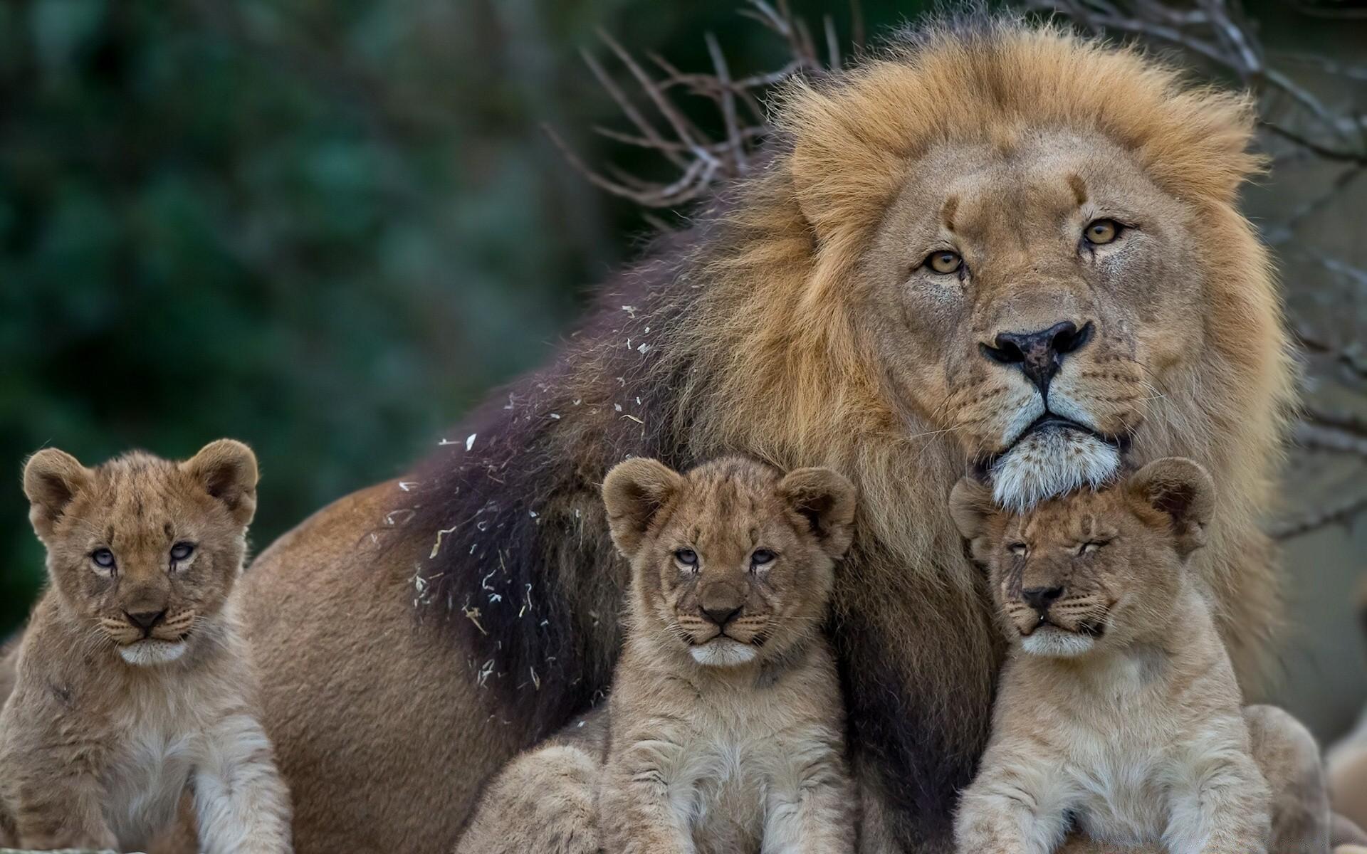Смешные картинки на львов