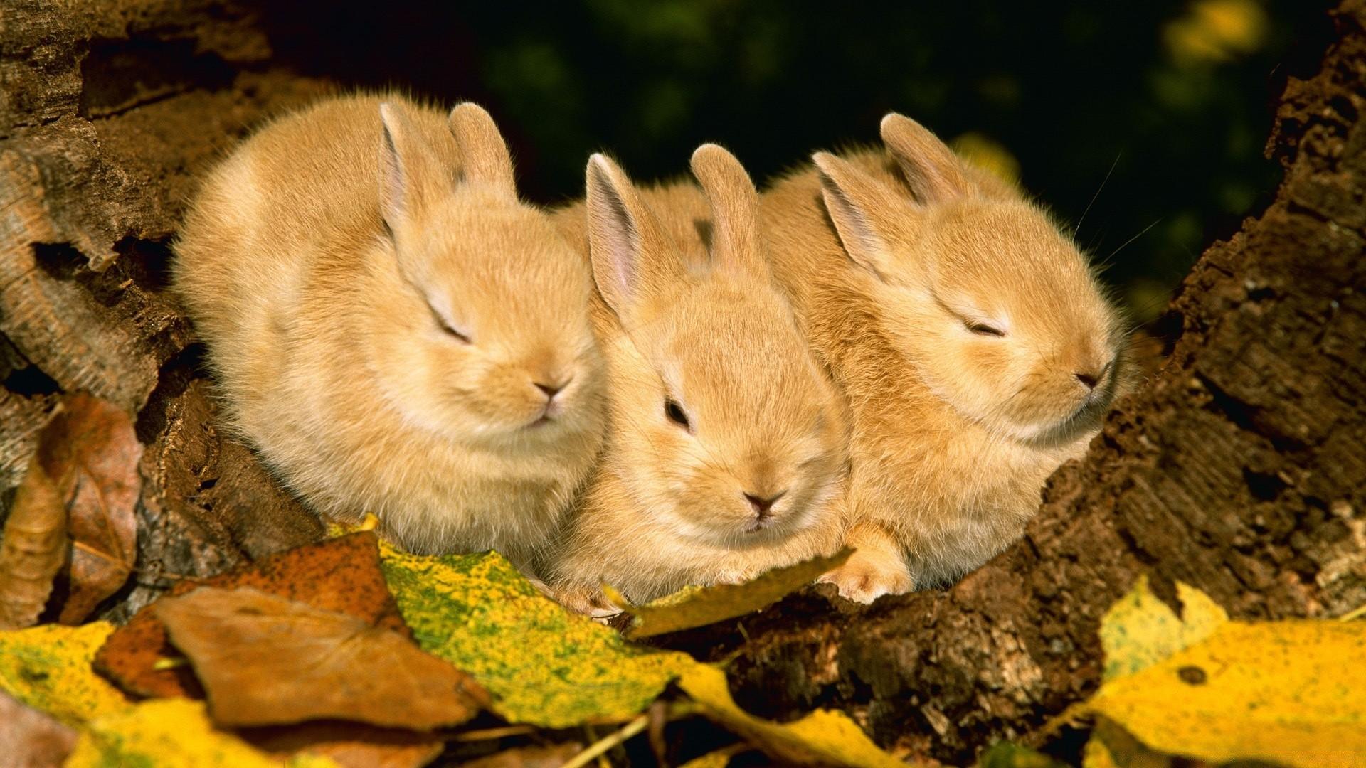 Красивое картинки с животными, всем приветик