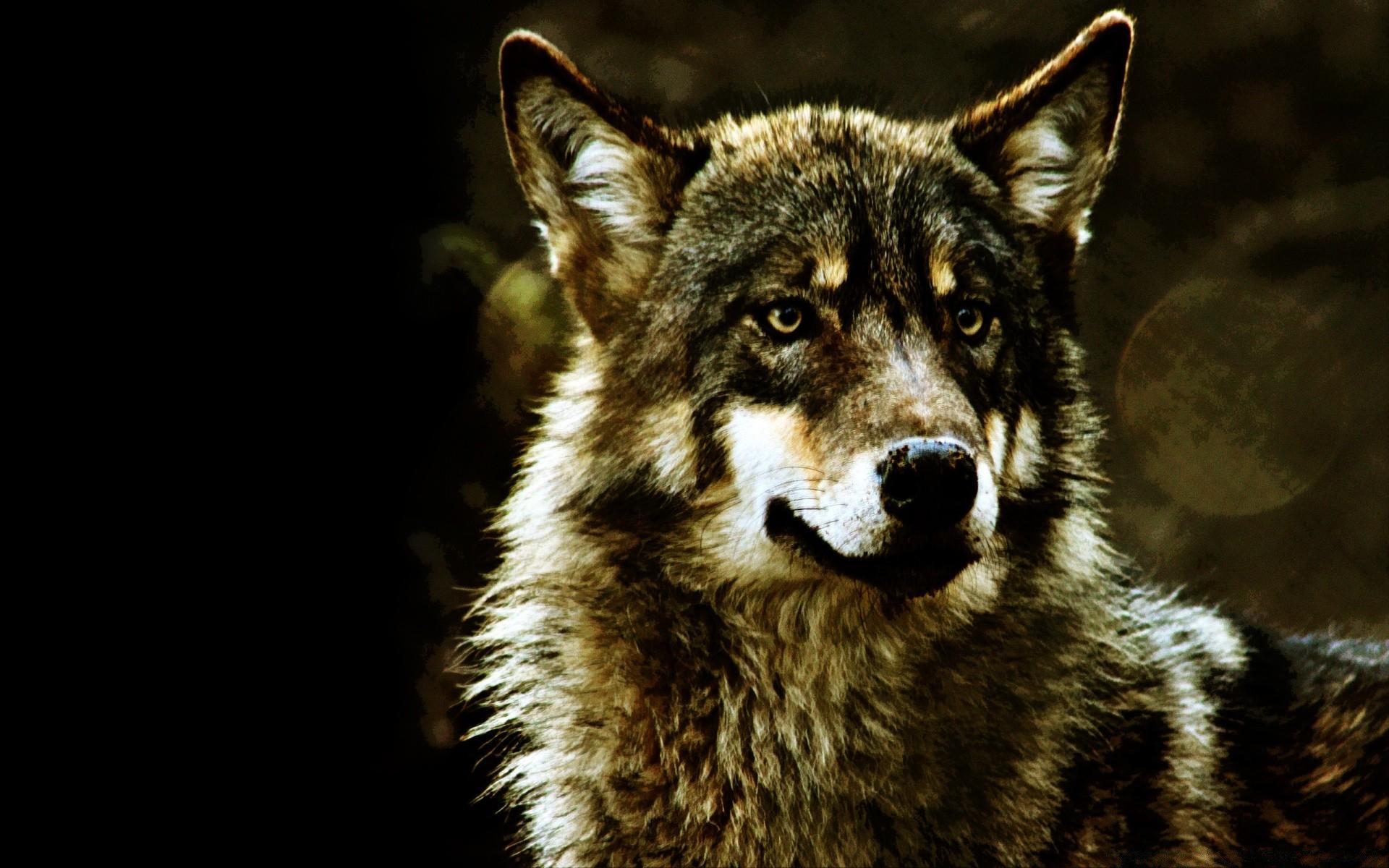 крутые картинки с волками на рабочий стол тот пусть офигенно