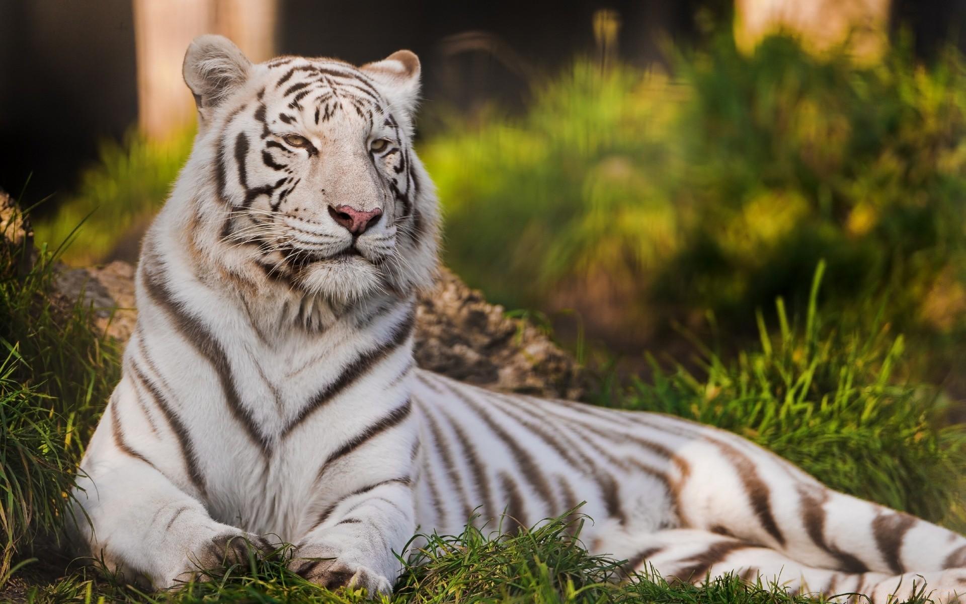 Веселые днем, картинки с животными красивые