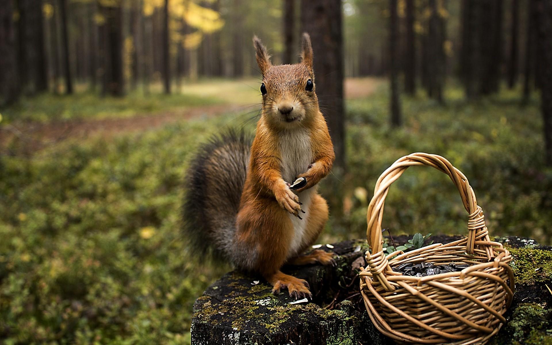 Карандаш прикольные, красивые картинки с природой и животными