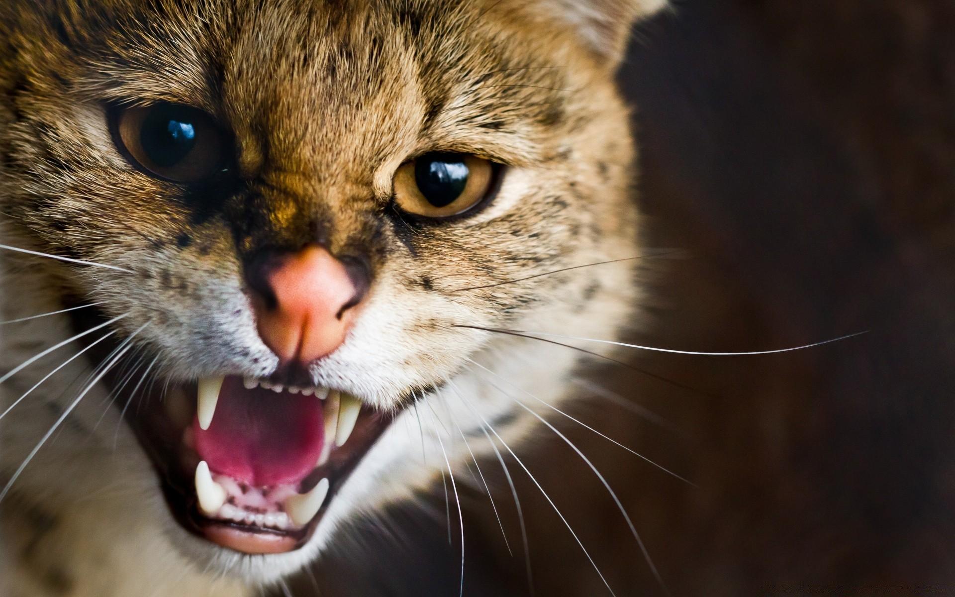Прикольные картинки злых кошек, открытка