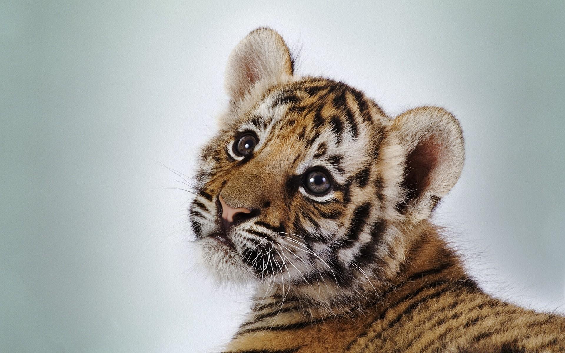 Картинки на рабочий про животных