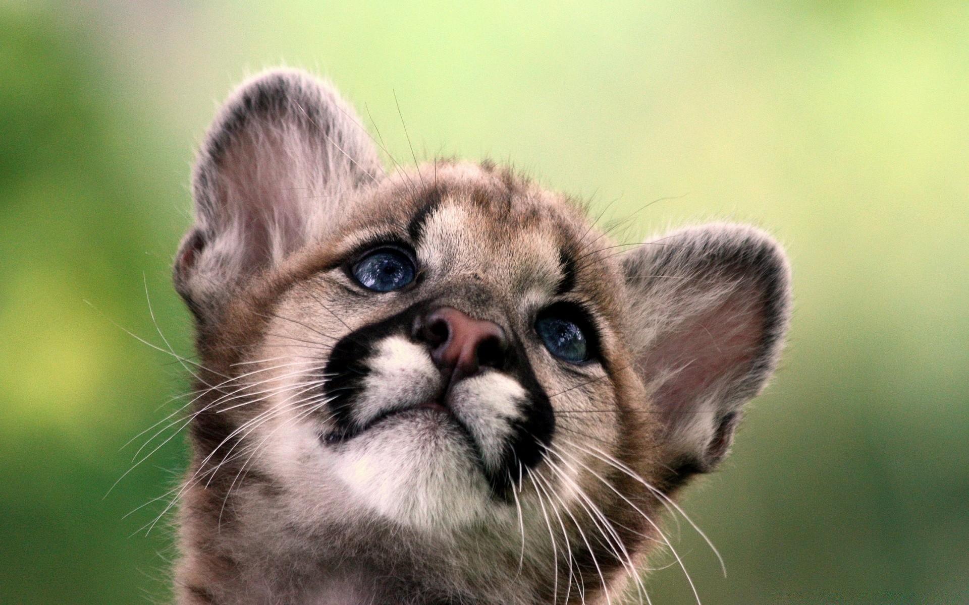 Прикольные, самые милые картинки про животных в мире