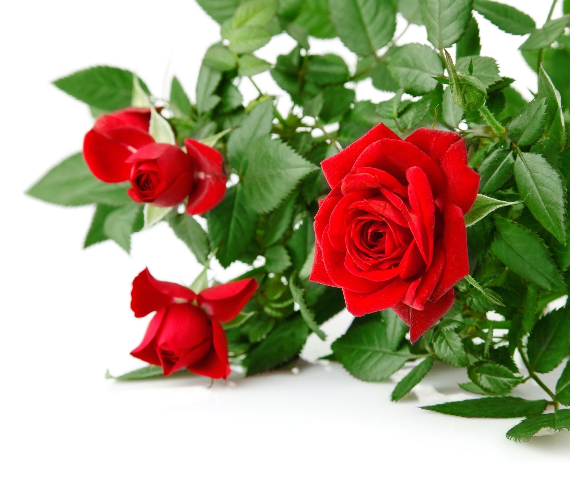 добрый день и вечер картинки с розами после установки пациент