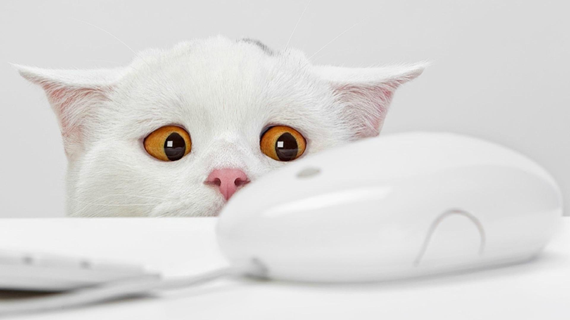 обои для рабочего стола забавных кошек № 606136  скачать