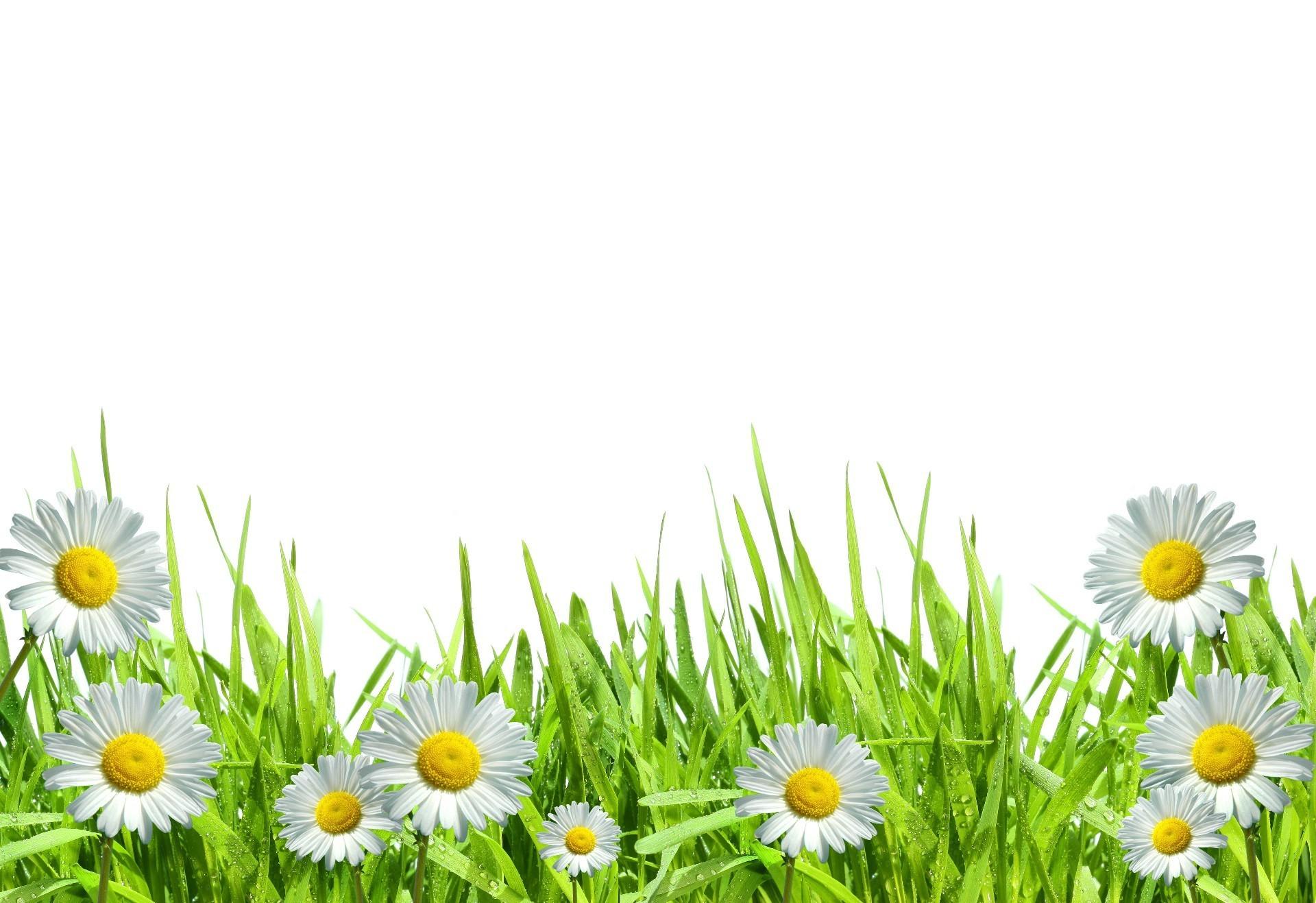 Цветы для фона картинки