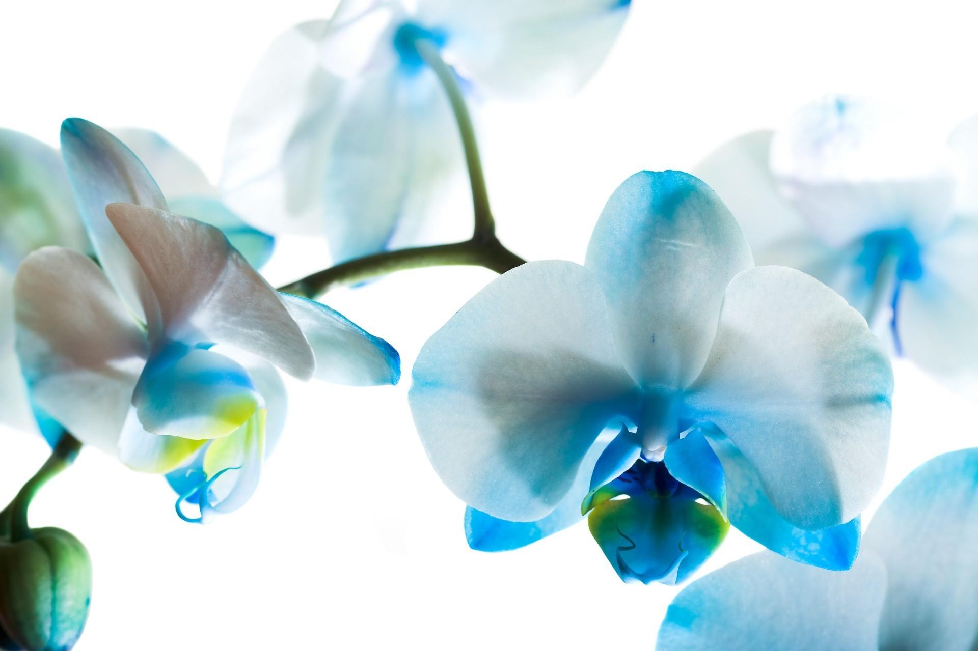цветы для постеров в хорошем качестве с большим разрешением продаже дач тюмени