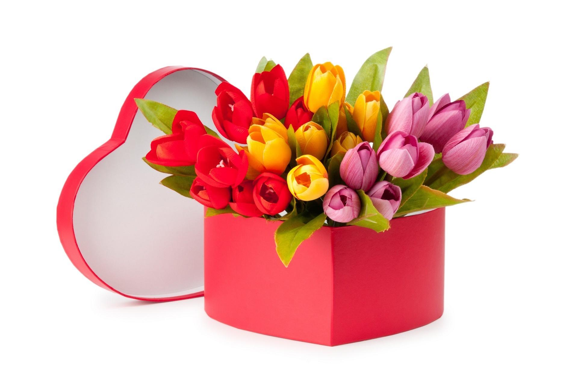 Тюльпаны и 8 марта картинки, конон менан