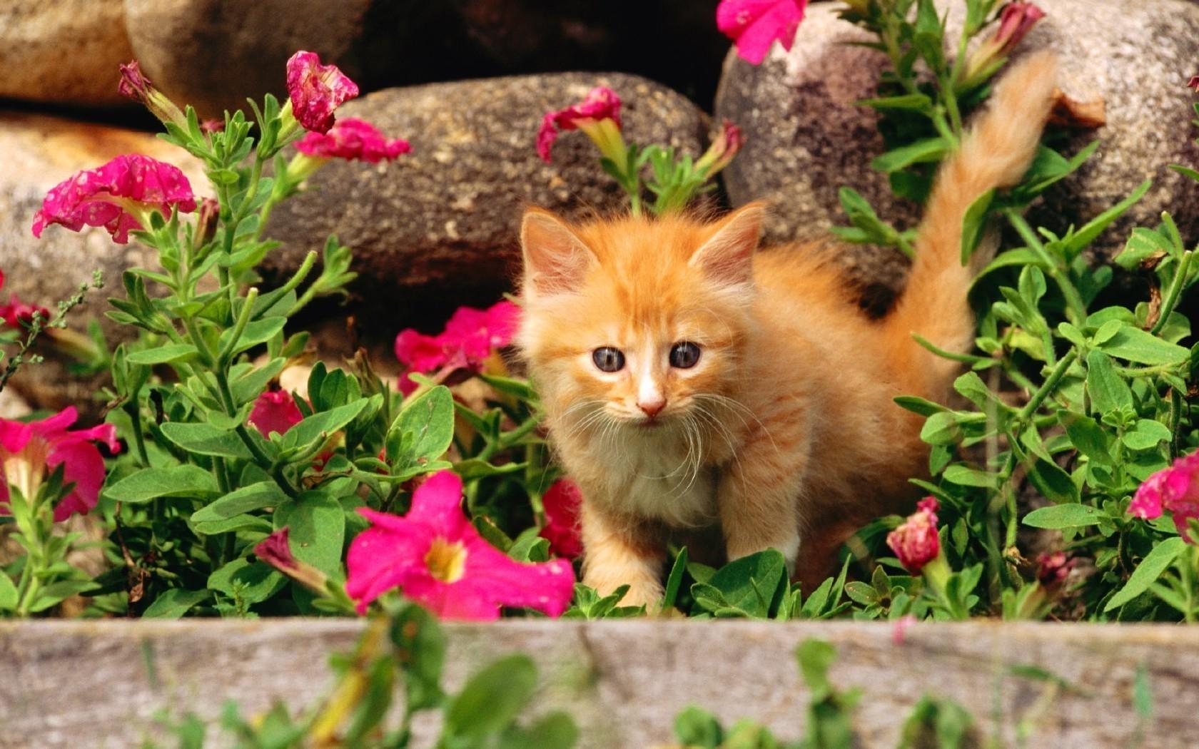 боятся картинки на рабочий стол животные летом в цветах кто женщин сможет