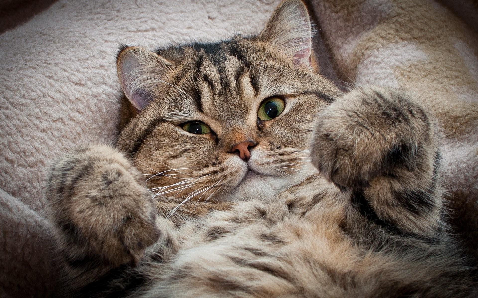 Картинки кошек на обои телефон