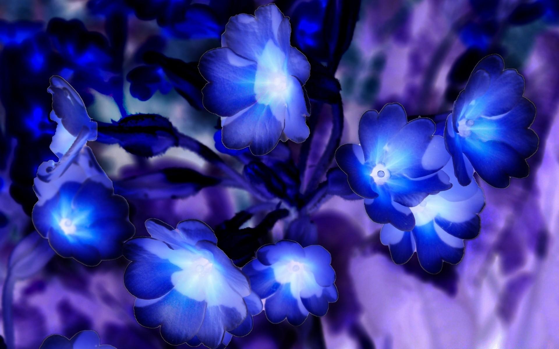 Купить живые голубые цветы, цветов украине житомирская