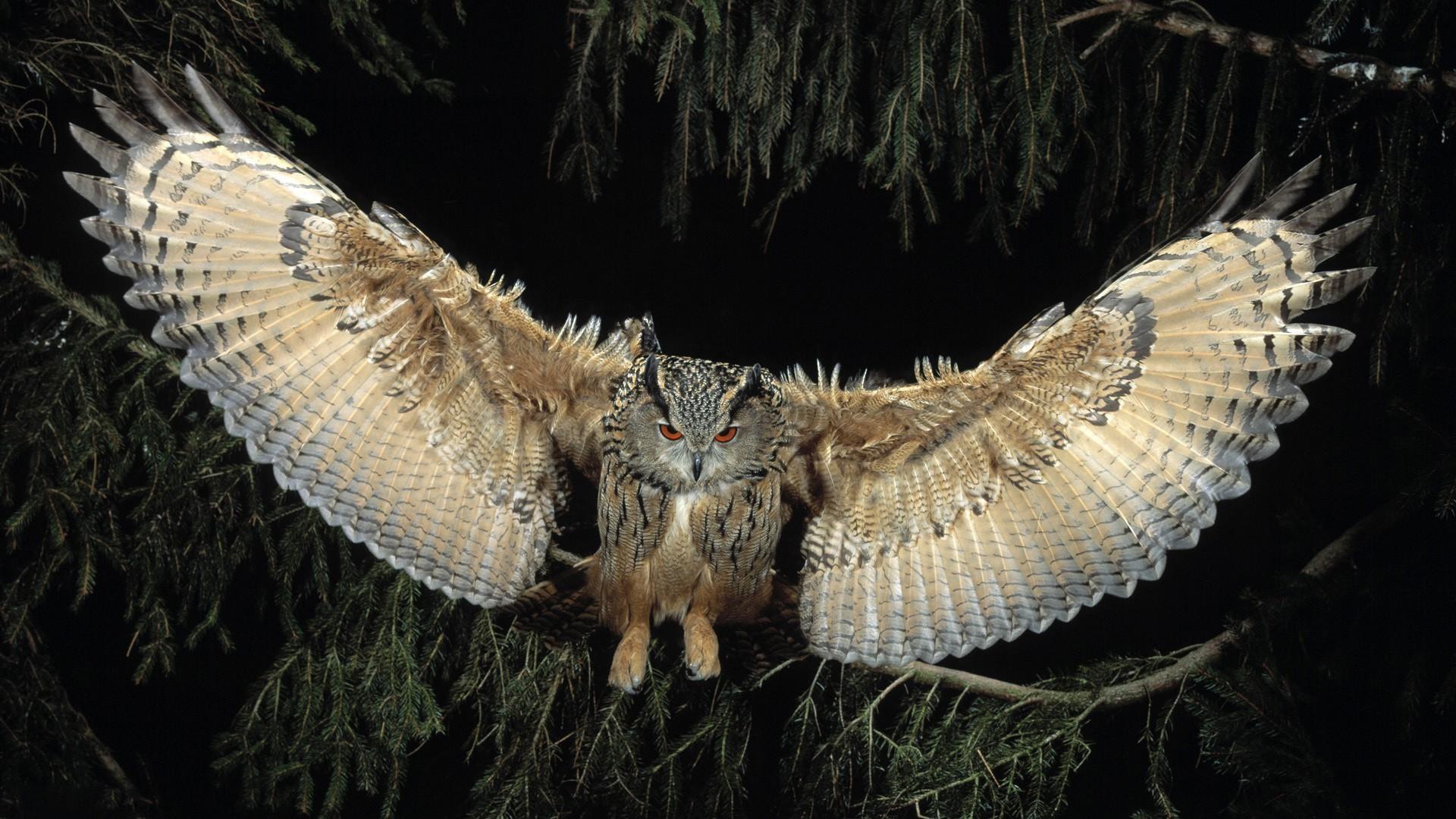 Летящая сова  № 481172 без смс
