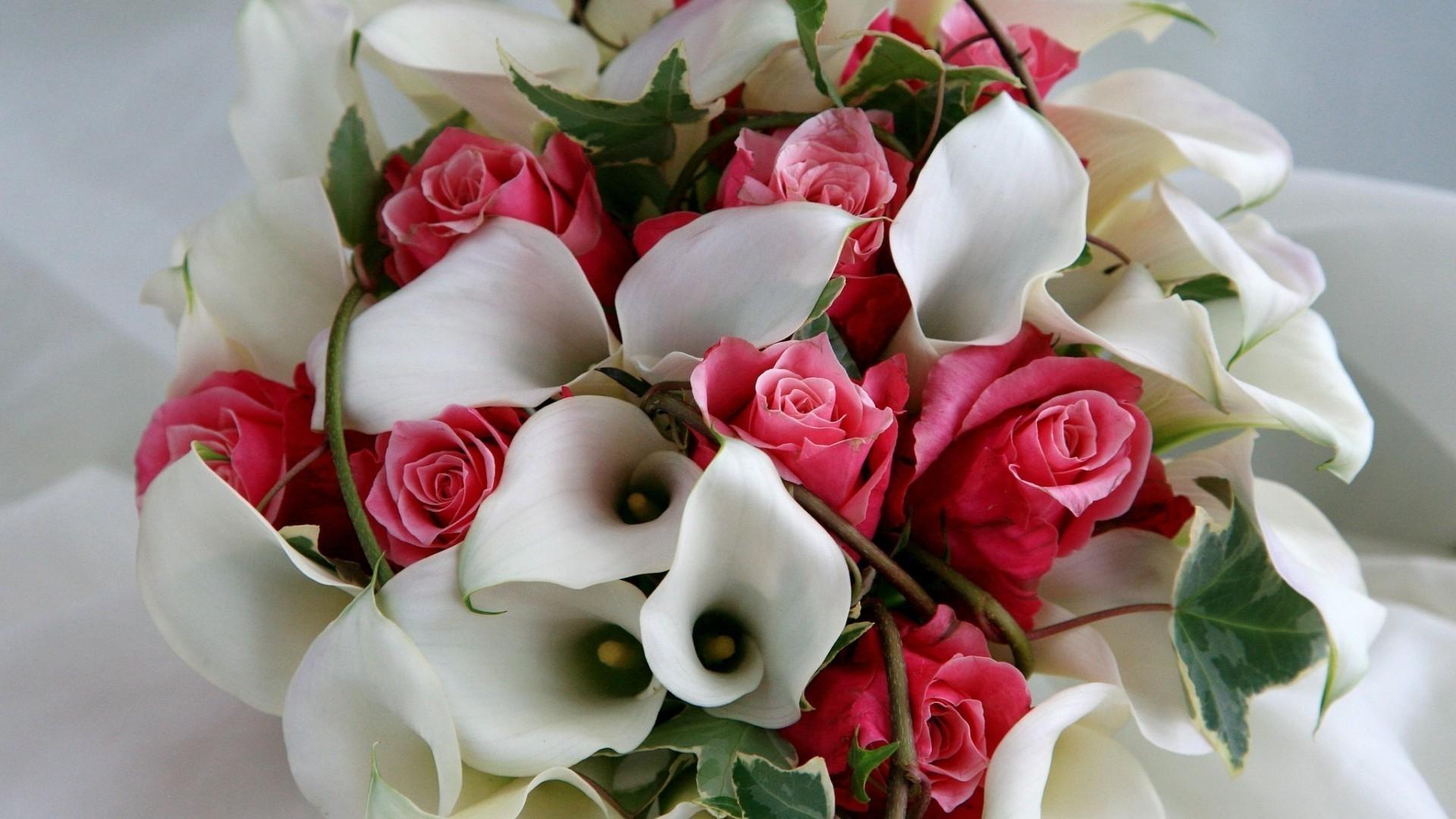 Красивые птицы, открытки самые красивые цветы мира