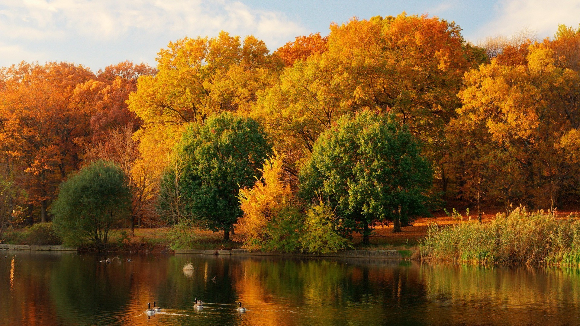 Открытки осень золотая фото, мая днем