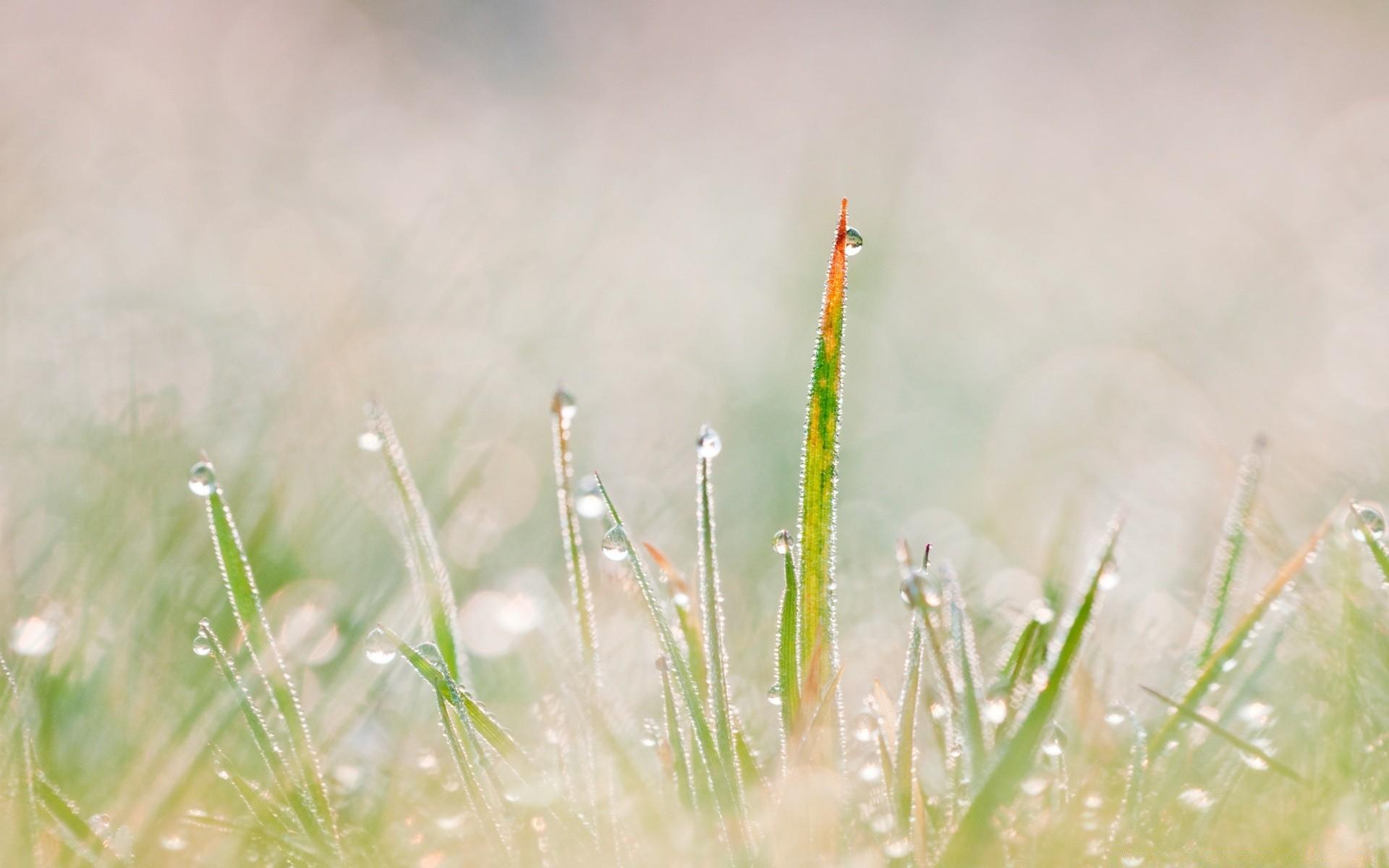 Трава макро съемка  № 3147989 загрузить