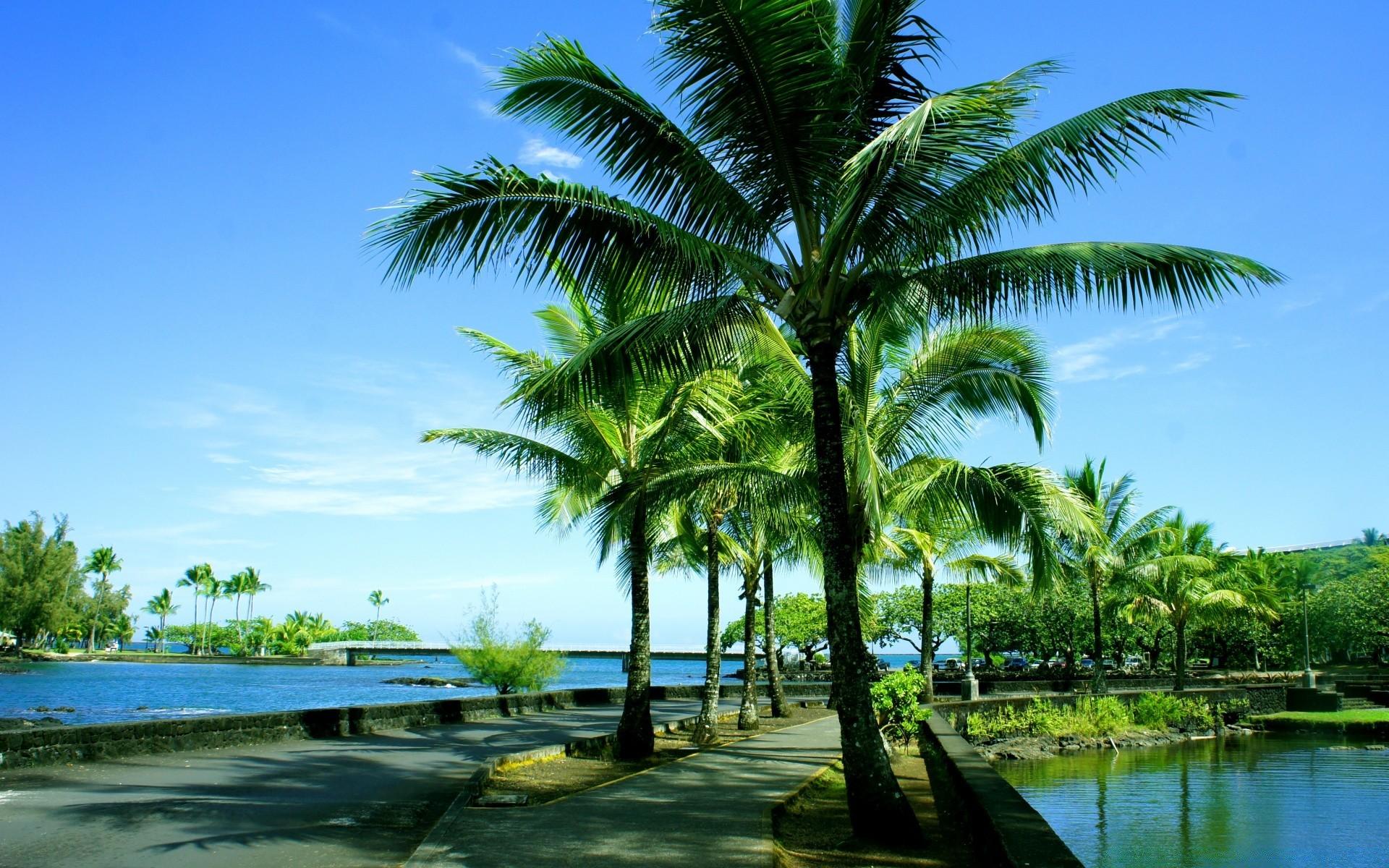 Картинки на рабочий стол с пальмами