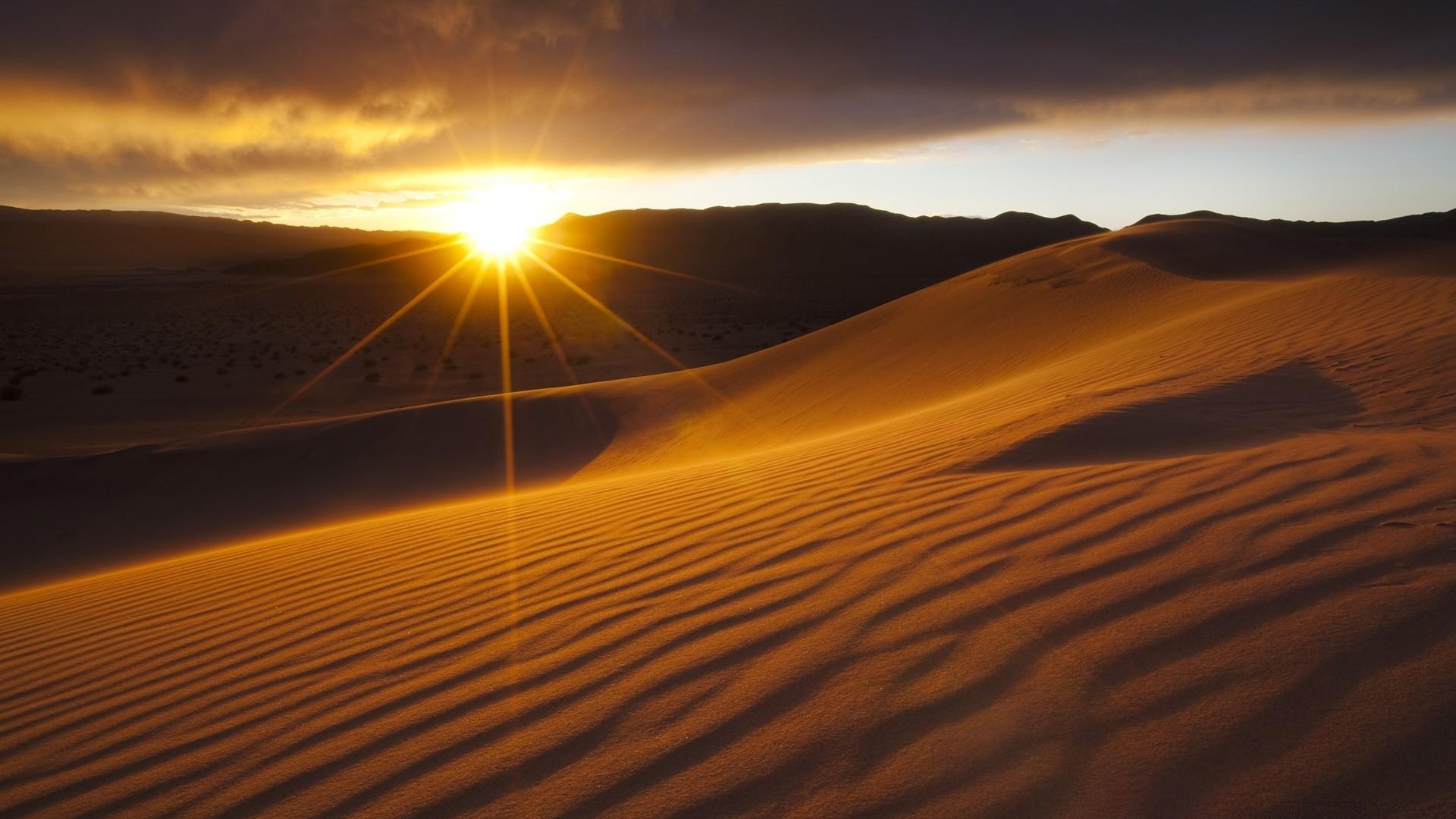 пустыня растения сонце закат на телефон