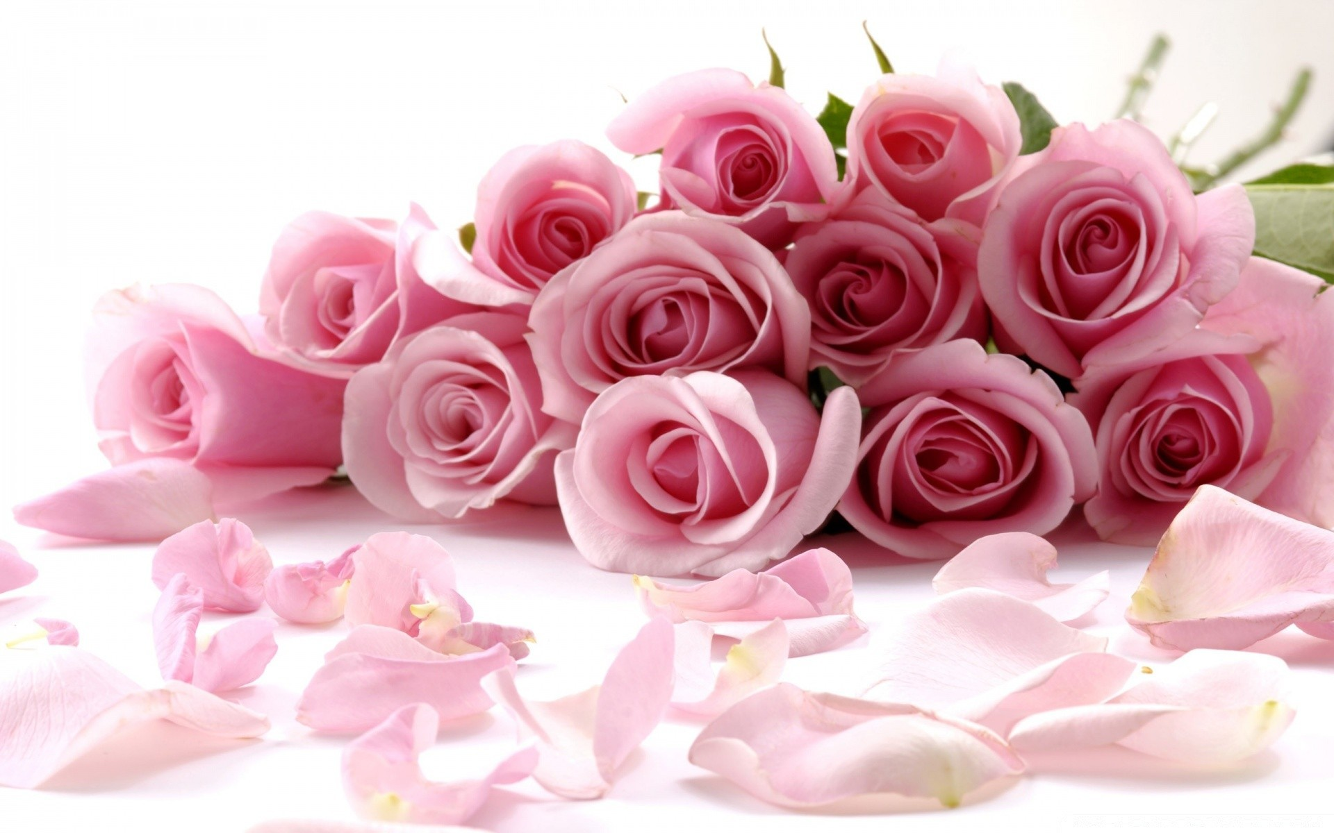 Лотоса, открытки с букеты цветов