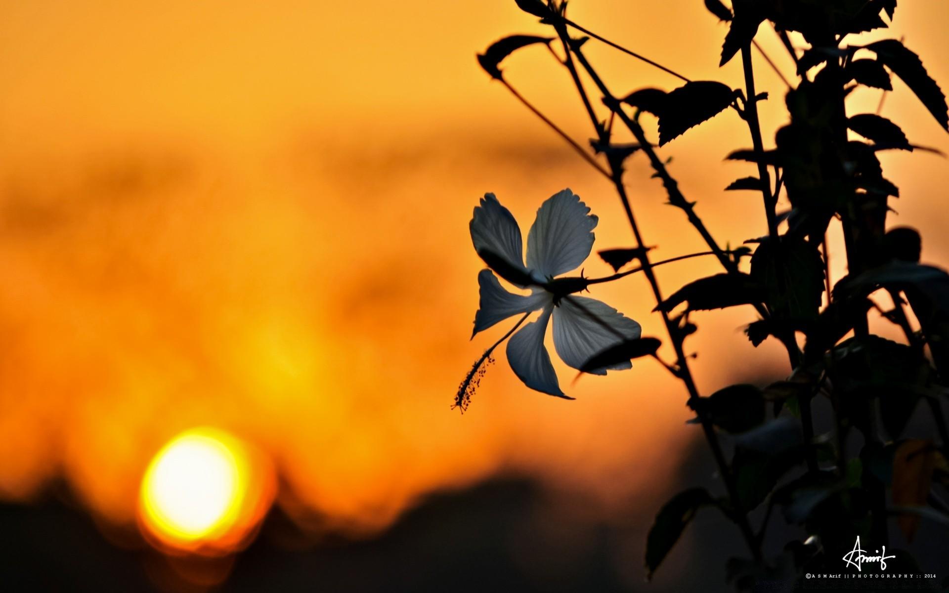 одинокий цветочек на закате без смс