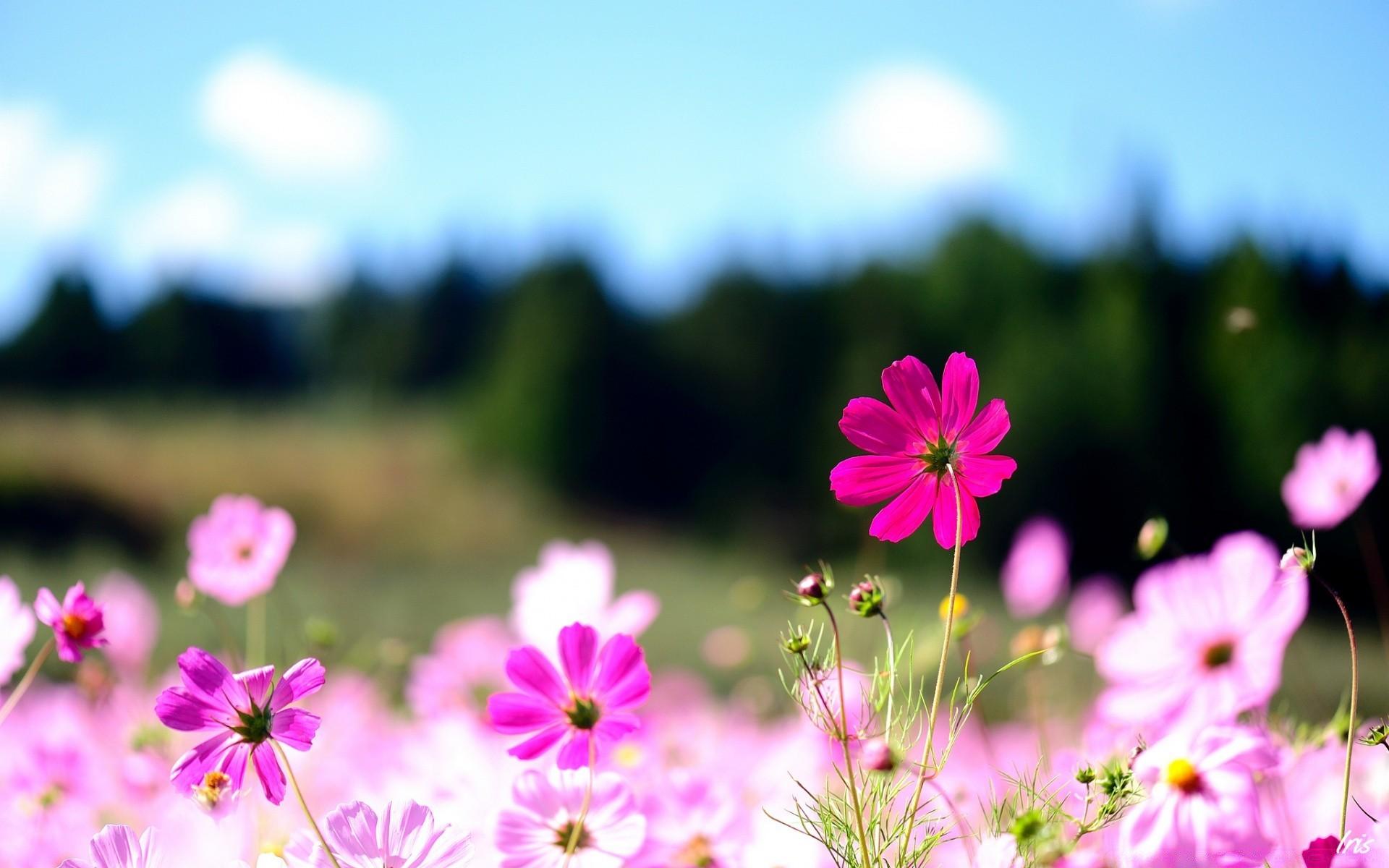пробор, фоновые картинки цветы 1920х1080 шить