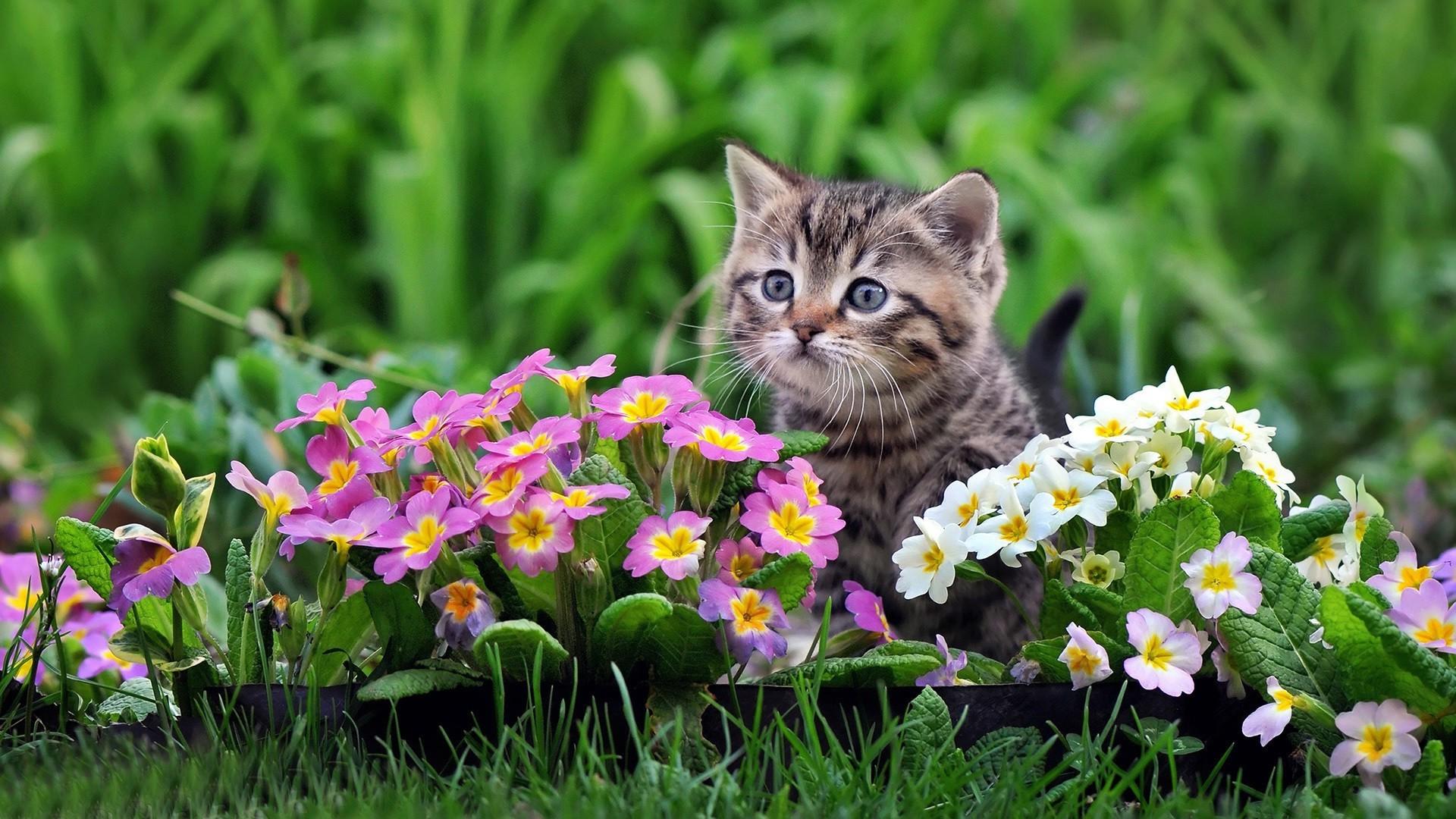 обои на рабочий стол котенок в цветах так хочется увезти