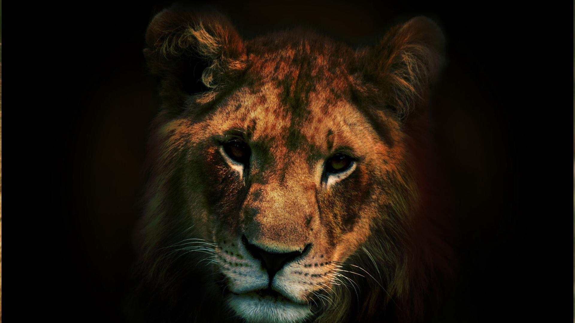 Взгляд льва без регистрации