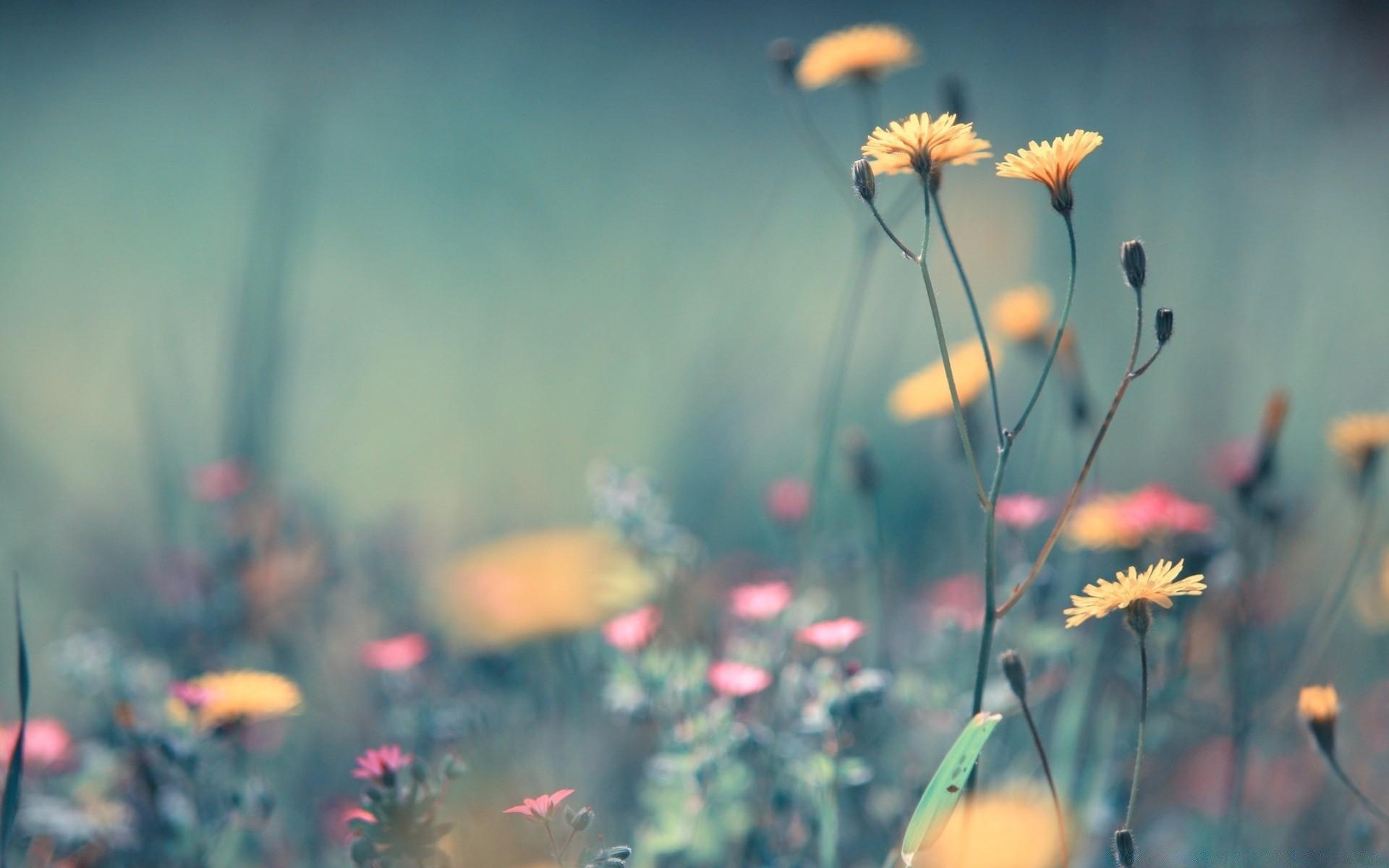 фото цветов высокого качества с цитатами здесь очень красивое