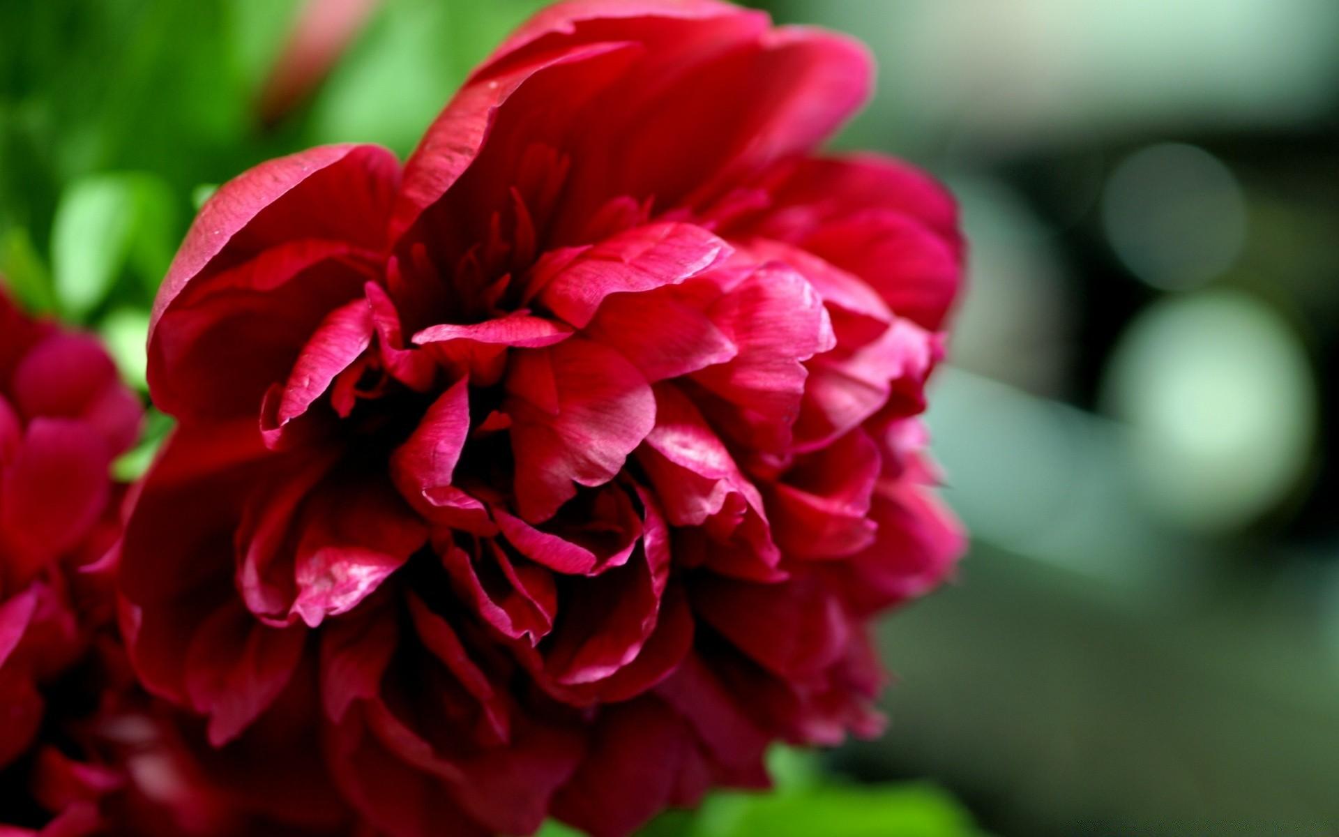 лучше восстановить, красные цветы картинки обои себе