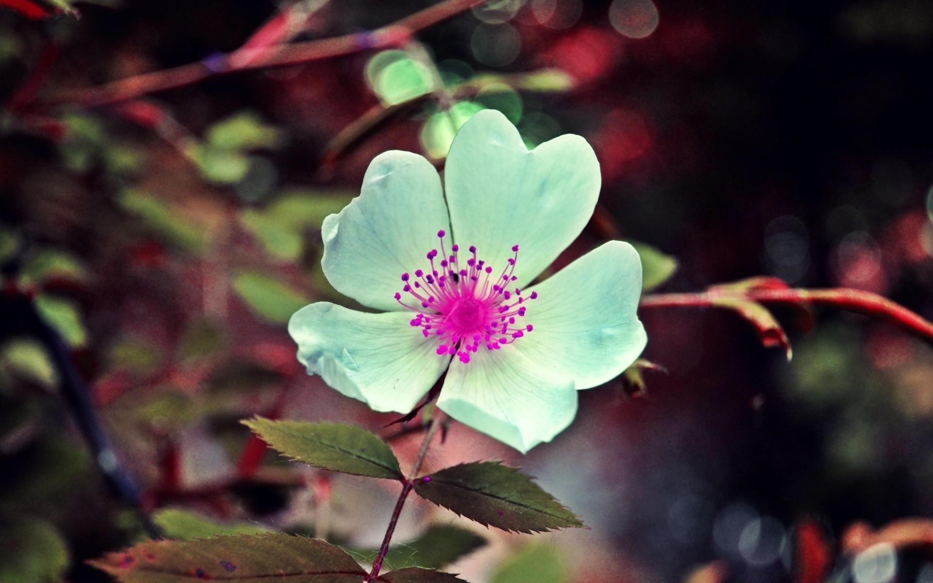 Сахарной бумаги, картинки цветов на телефон андроид