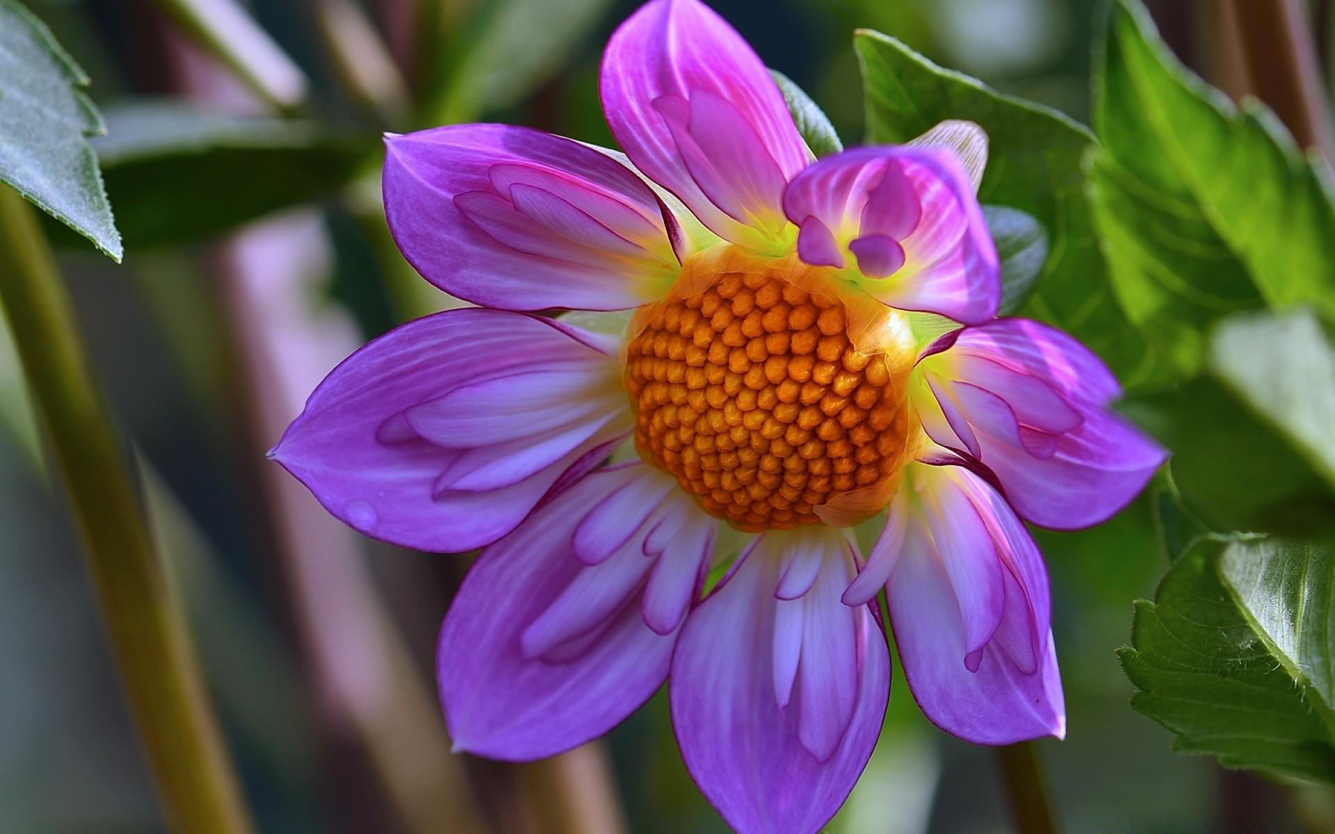 собраны цветы крупным планом фотографии казалось