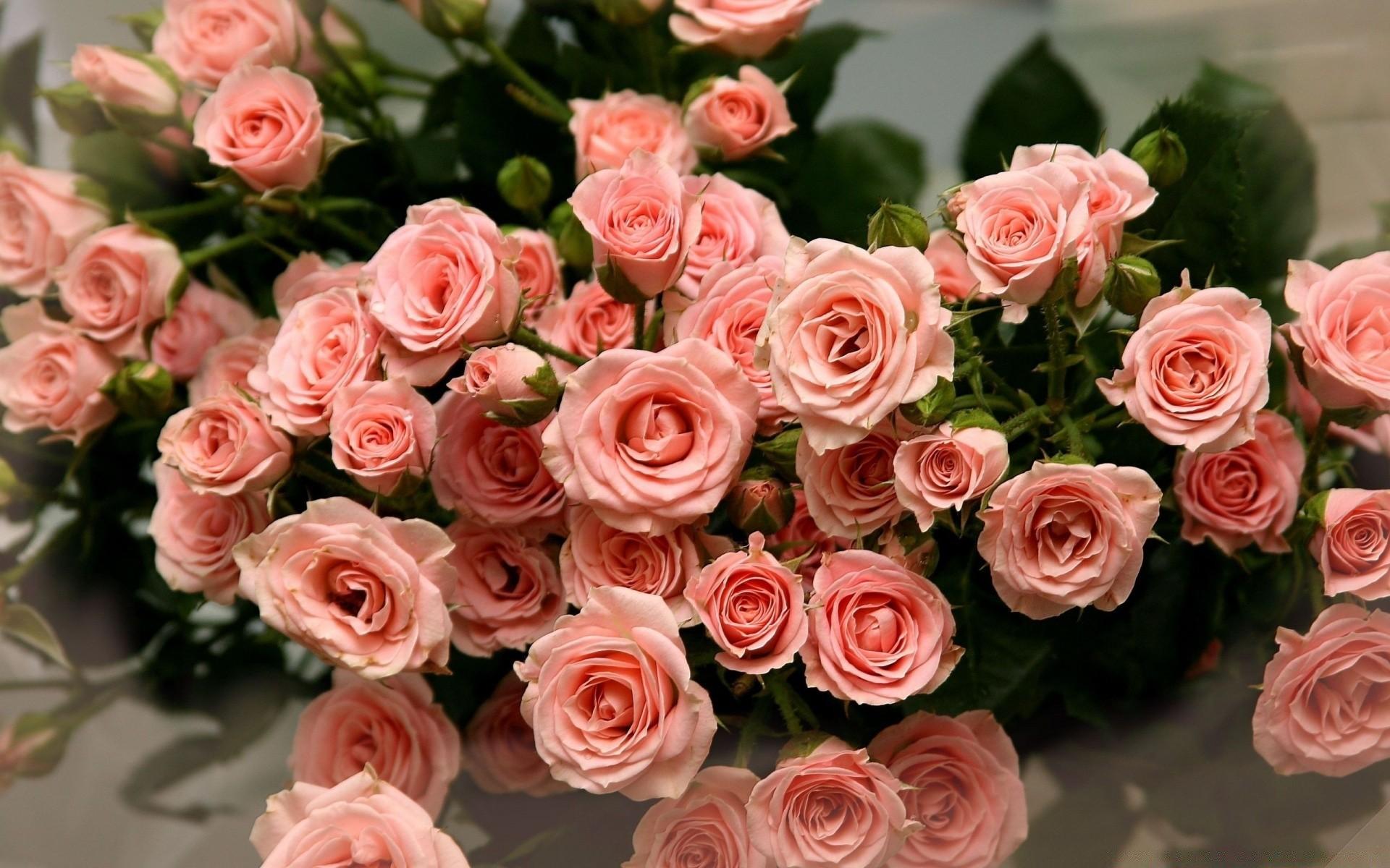 маленькие розы открытки из-за тайных