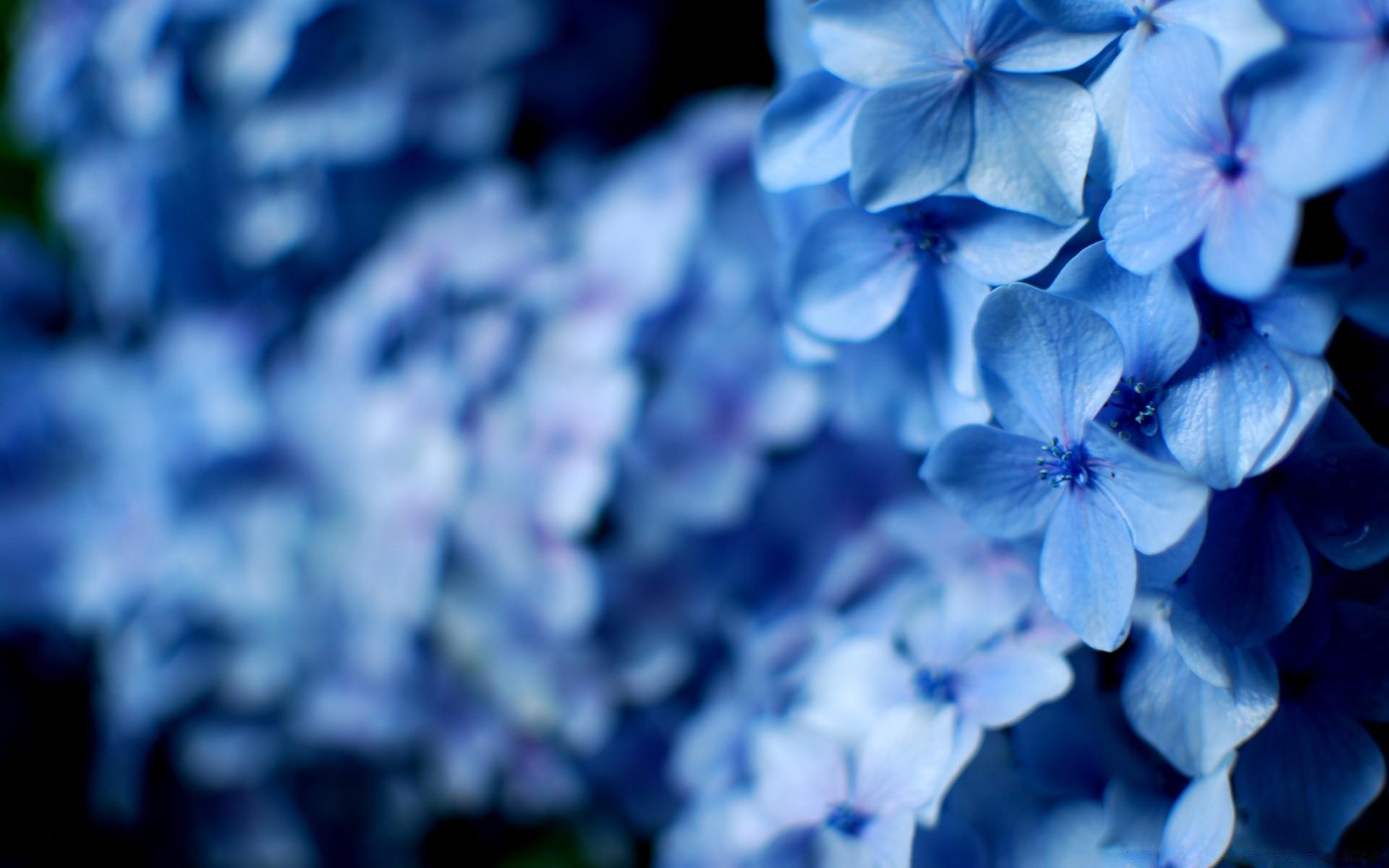Картинки цветы голубые