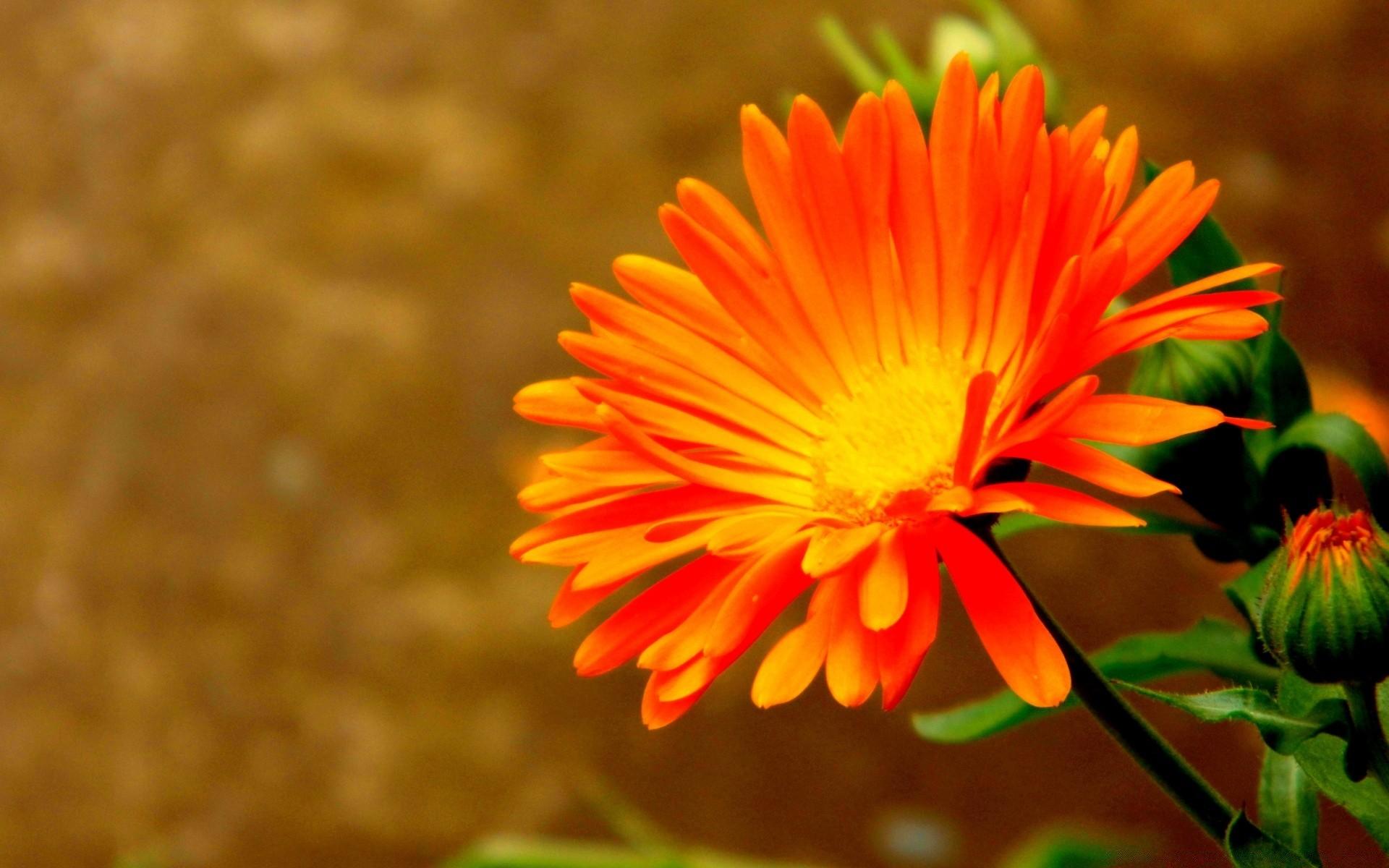 Открытки, картинки оранжевых
