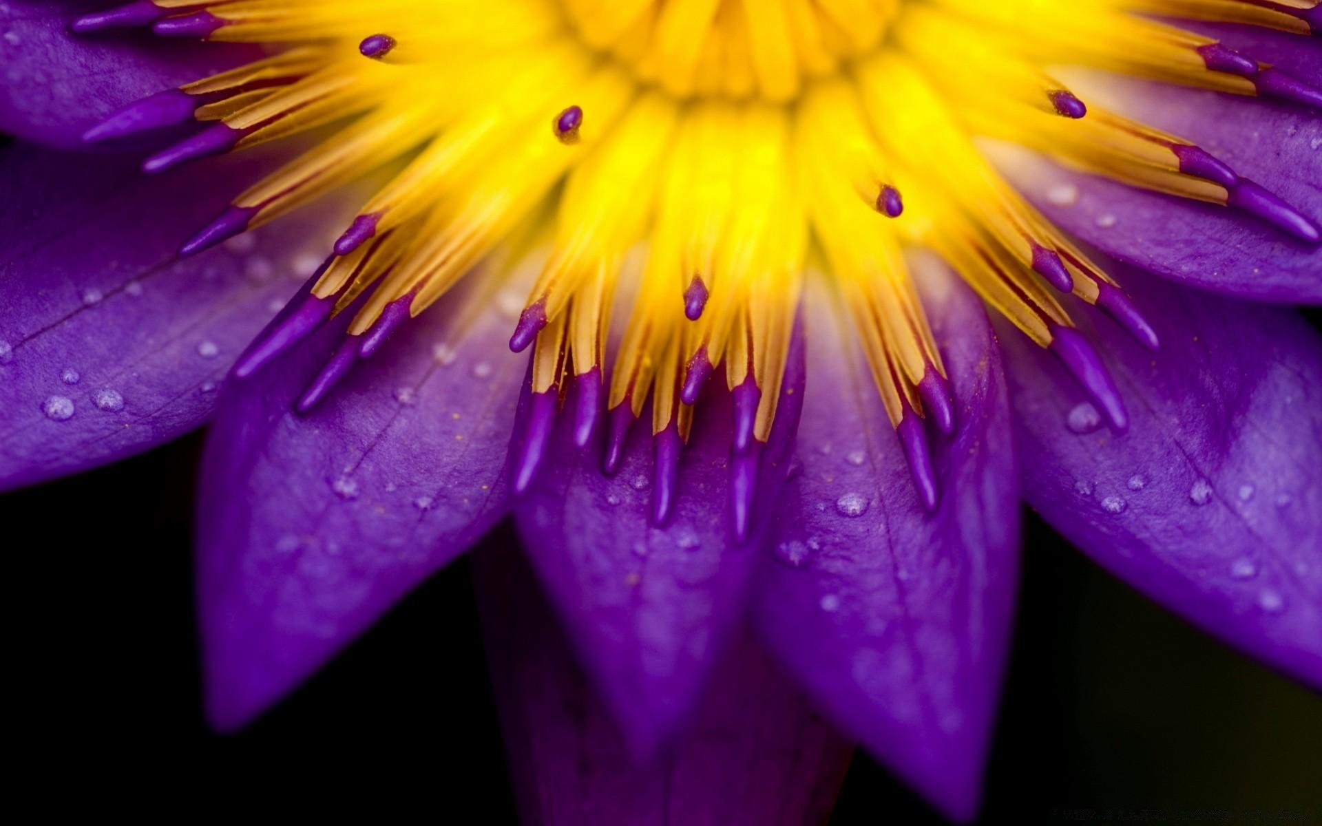Видео добрым, картинки яркие цветы