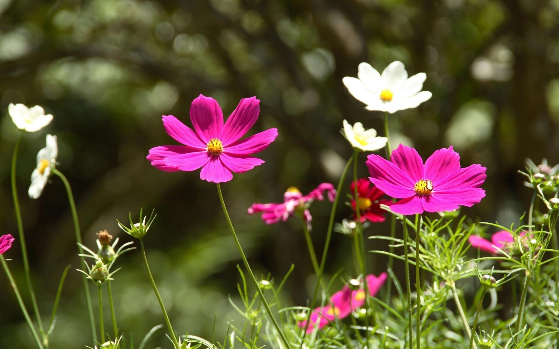 Цветы - обои на телефон бесплатно.  Обои на Телефон Цветы