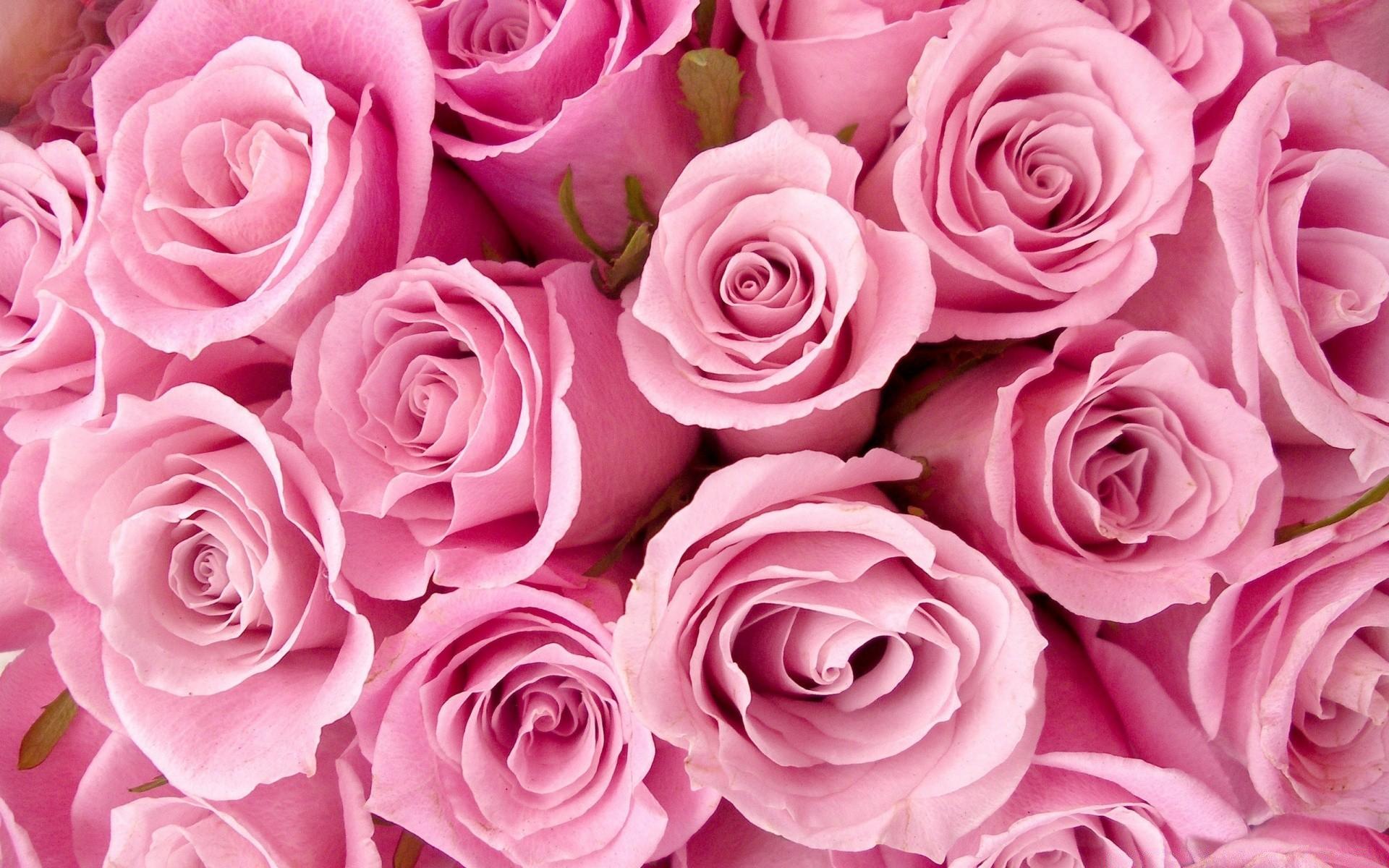 Картинки цветы розовые, сделать книжку открытку