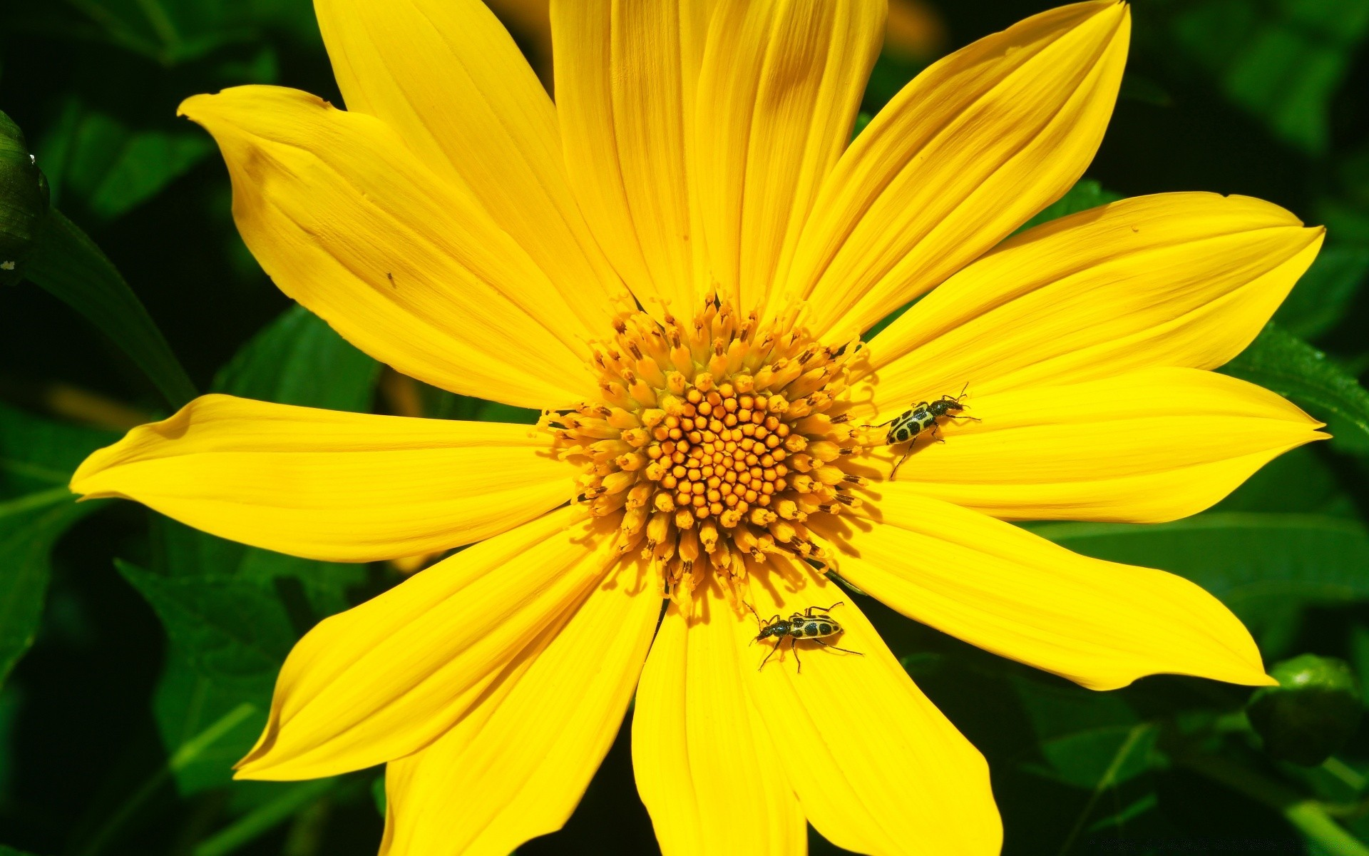 Открытка коллегам, картинки с желтыми цветами