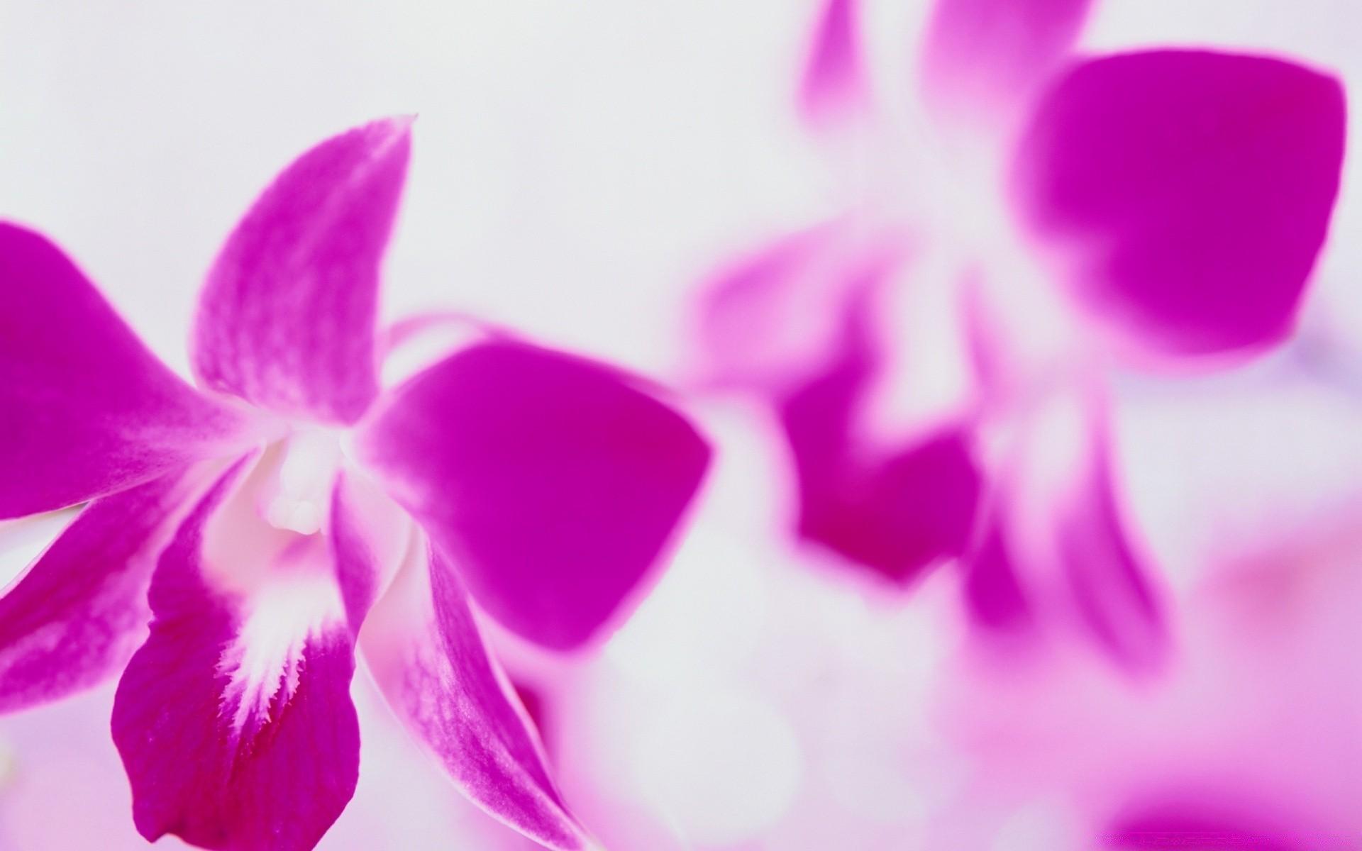 цветы цветок природа тропический орхидеи романтика флора экзотические элегантный лепесток яркий цветочные нежный блюминг лето лист любовь фаленопсис сад красивые
