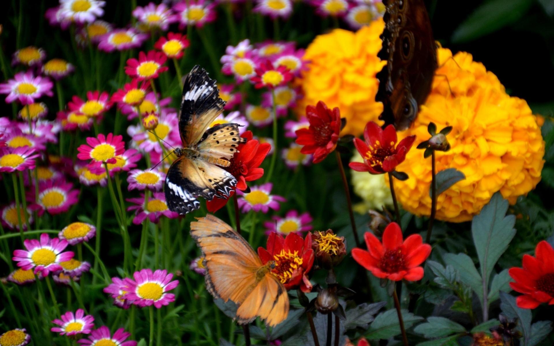 Картинка с изображением цветов и бабочек