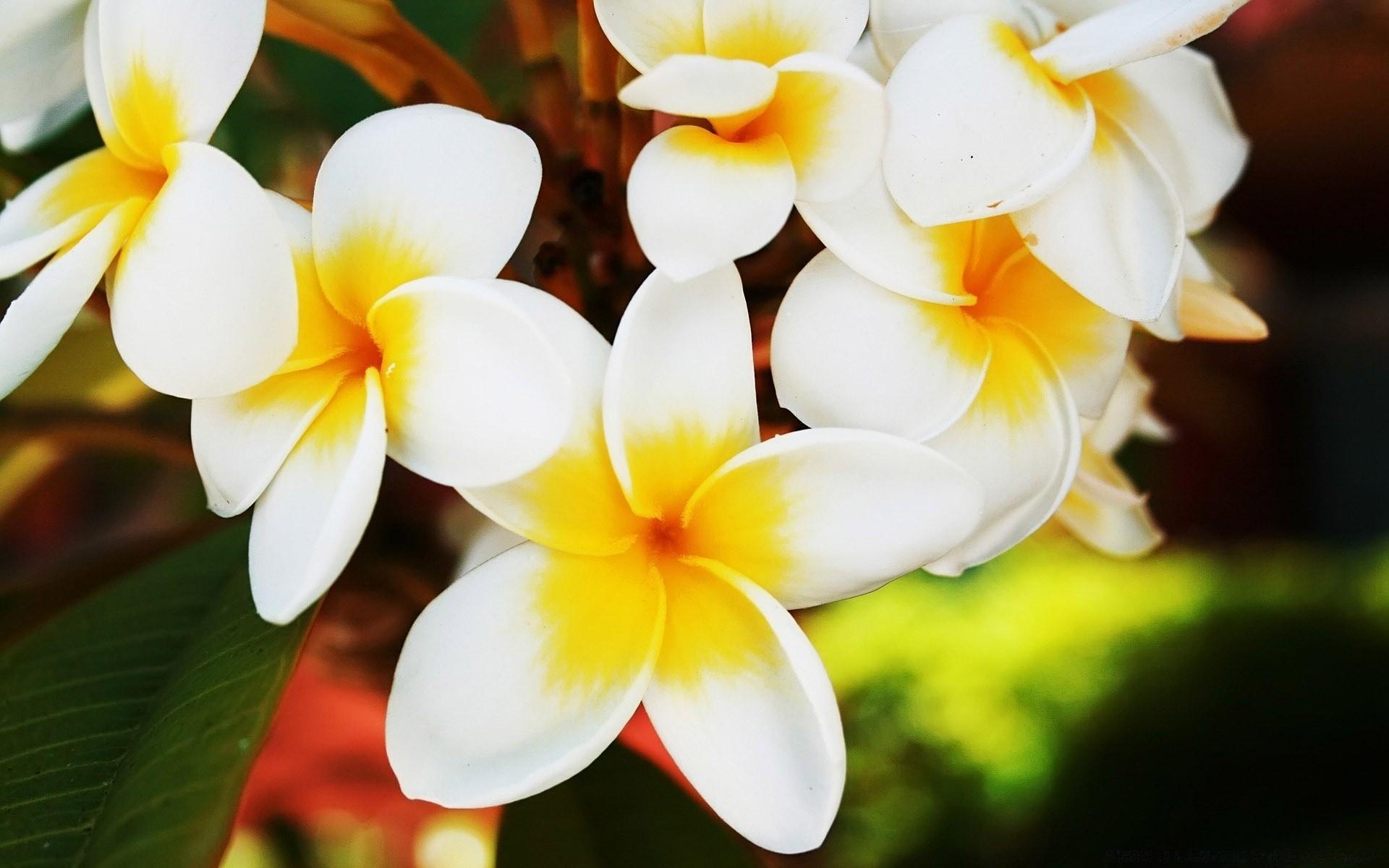 Обои картинки для рабочего стола цветы фото