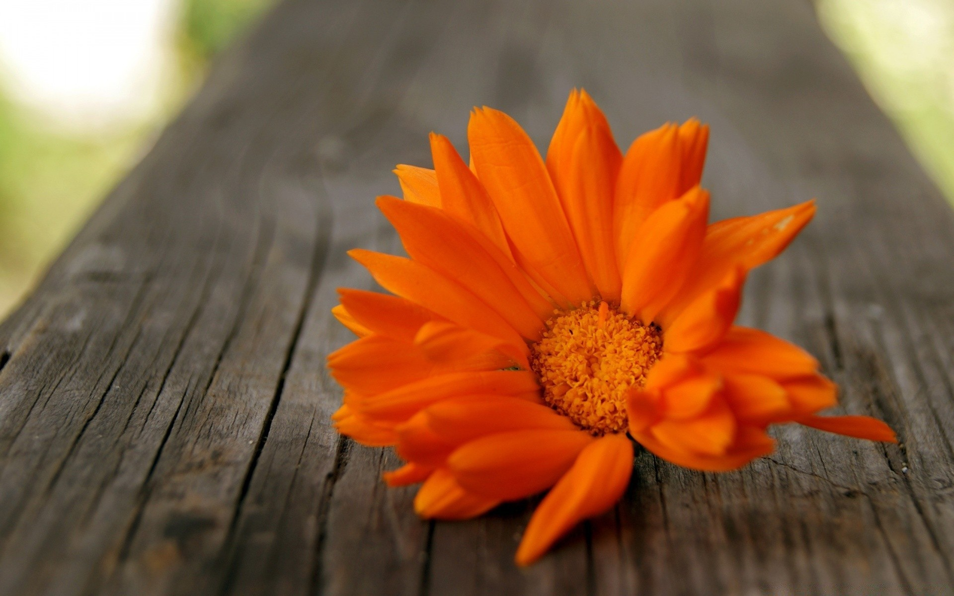 Оранжевая картинка на рабочий стол