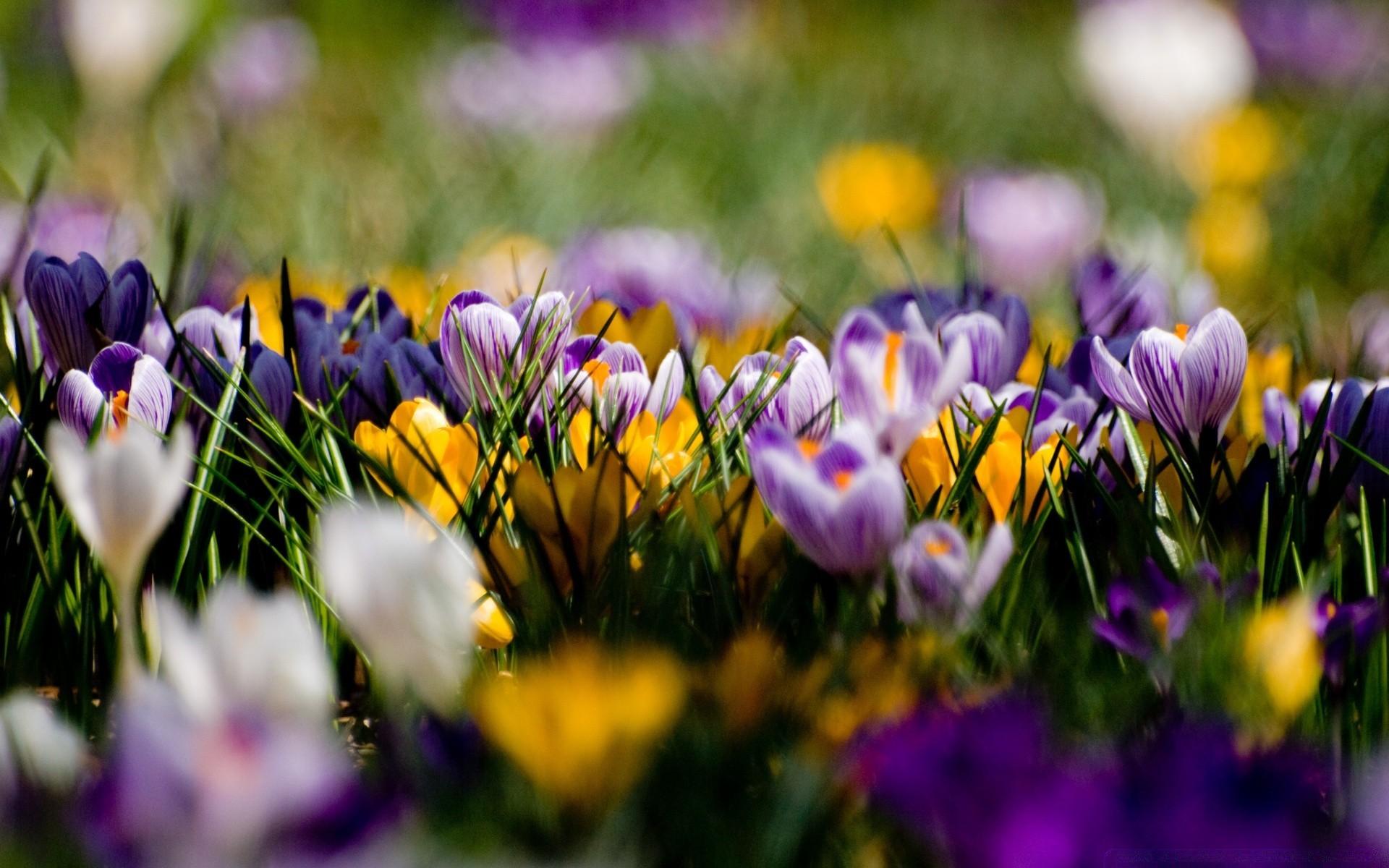 красивые картинки весна на рабочий стол широкоформатные был ранен