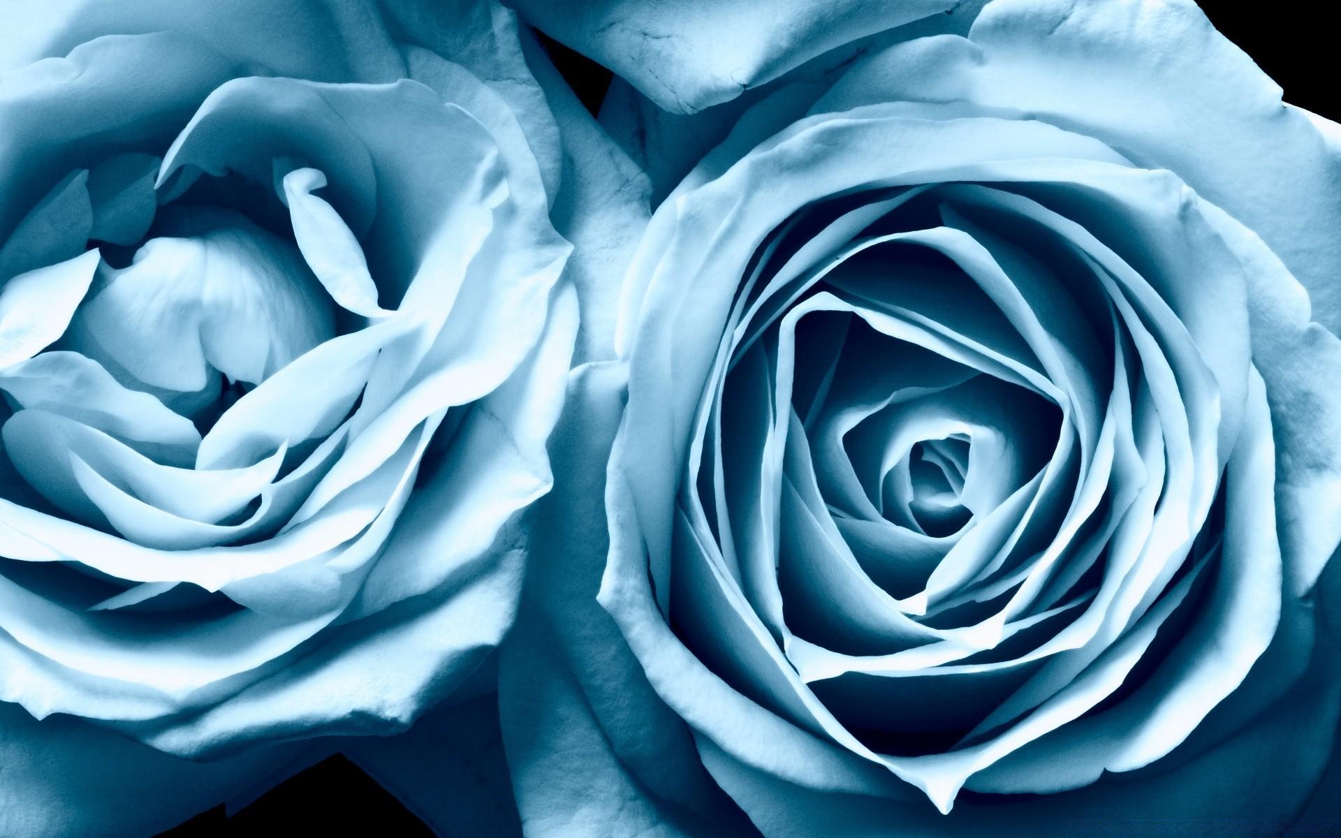 слышите обои на самсунг розы сами разработчики утверждают