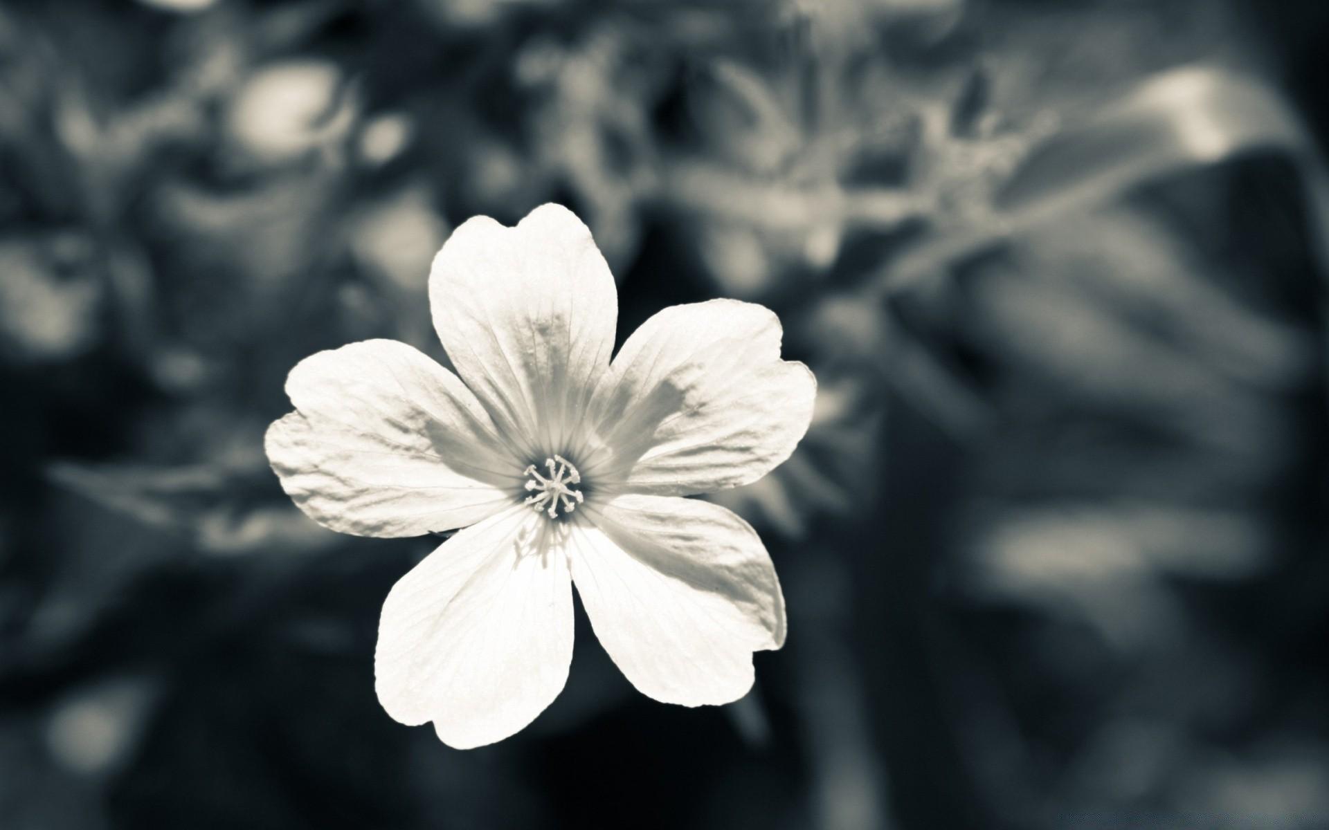 цветы на столе картинки черно-белые