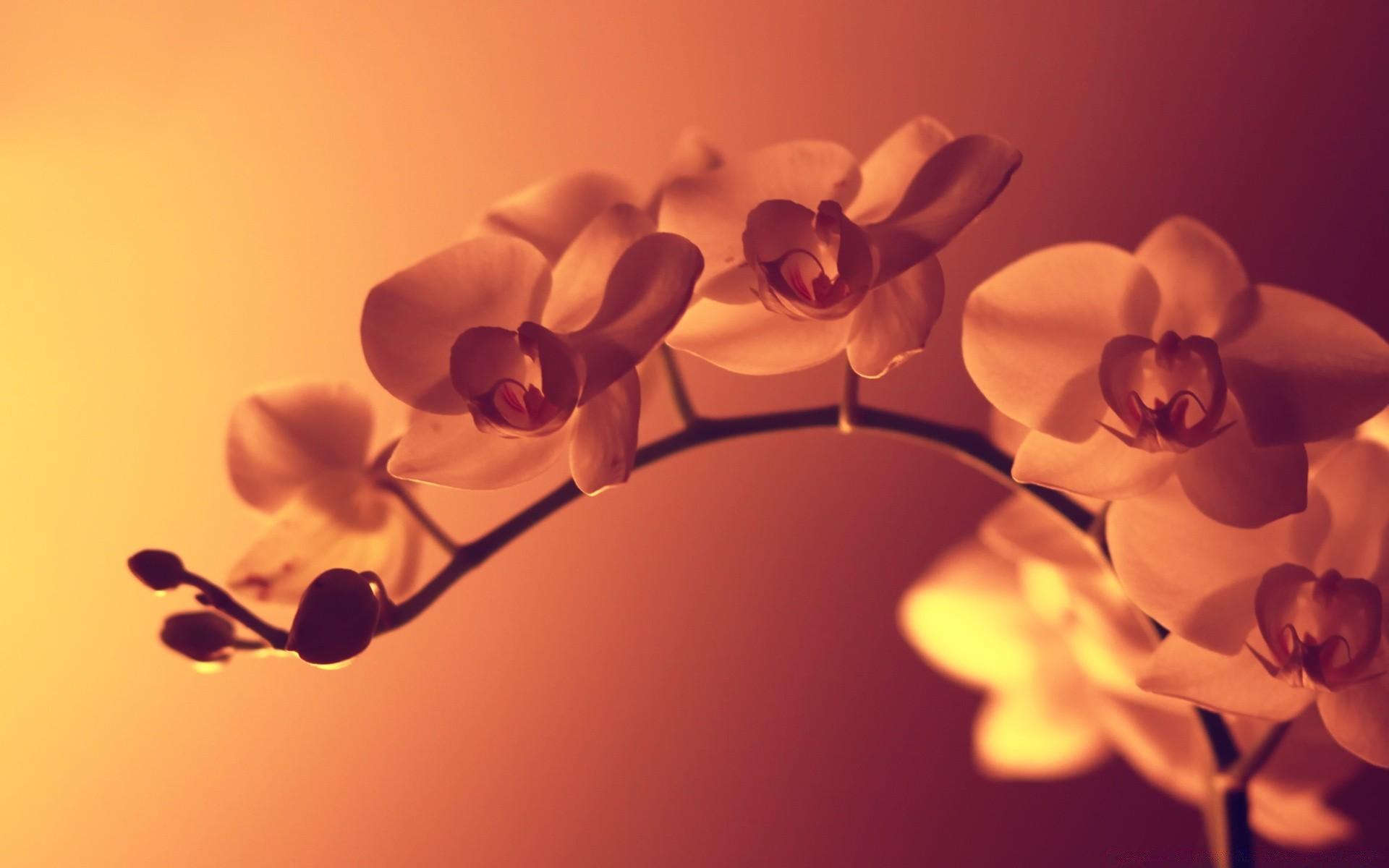 Широкоформатные картинки цветы на рабочий стол